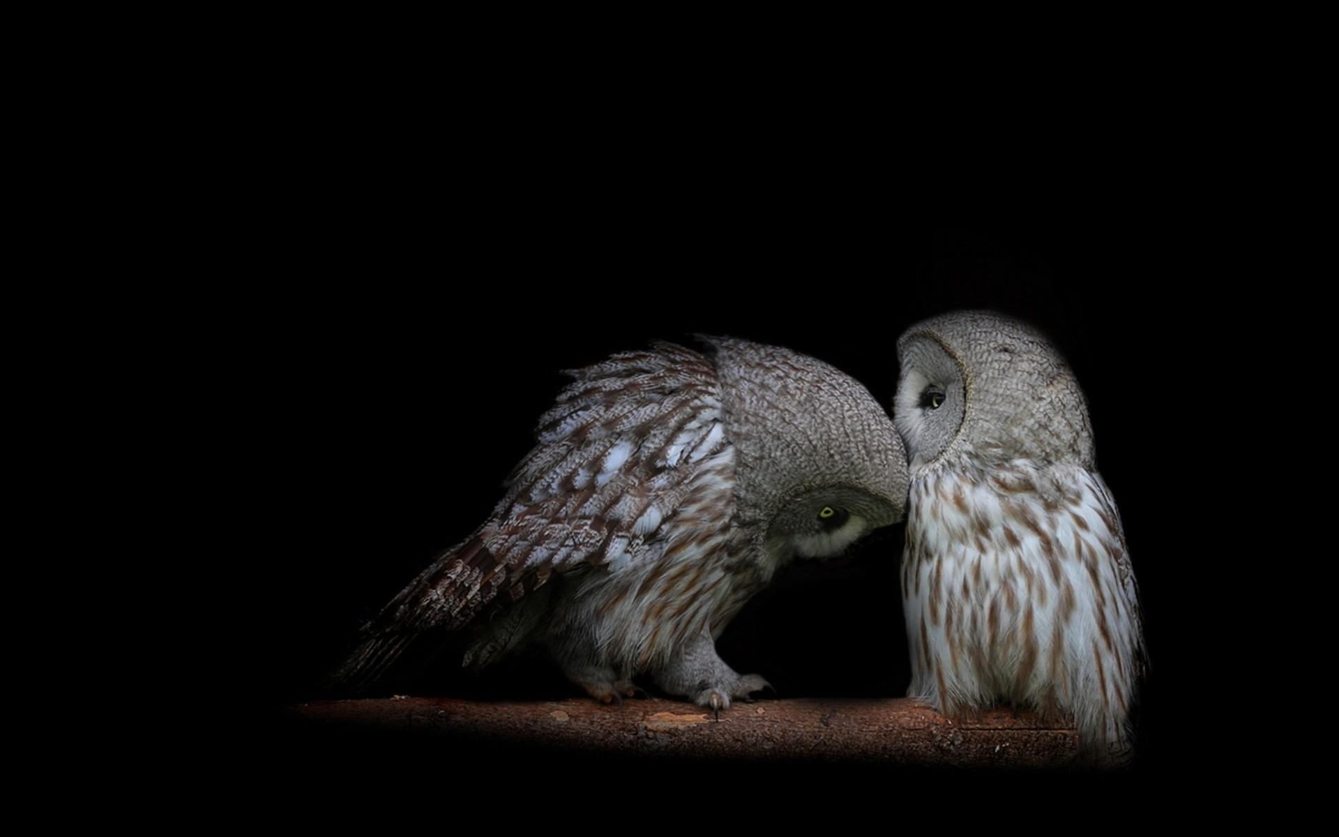 … Kissing owls