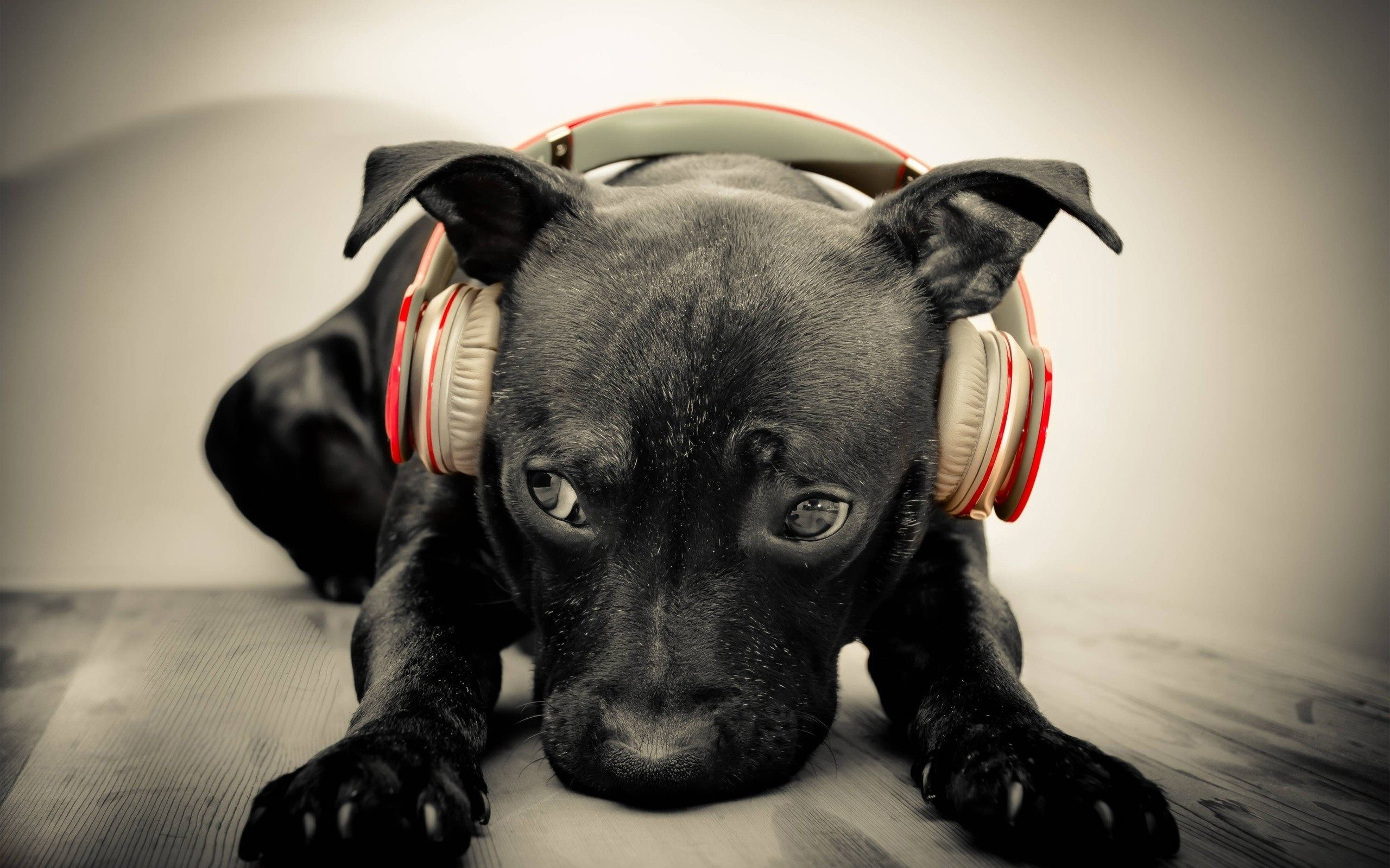 Headphones and Animals Wallpaper 1080p