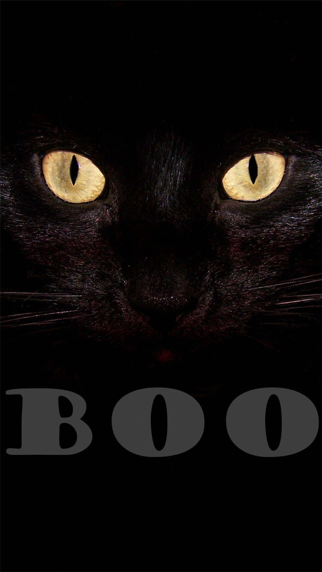 Black cat Boo Halloween iPhone 6 plus wallpapers 2014 #iphone #wallpaper