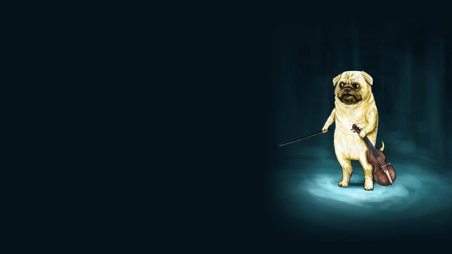 Pug Playing the Violin – Wallpapers