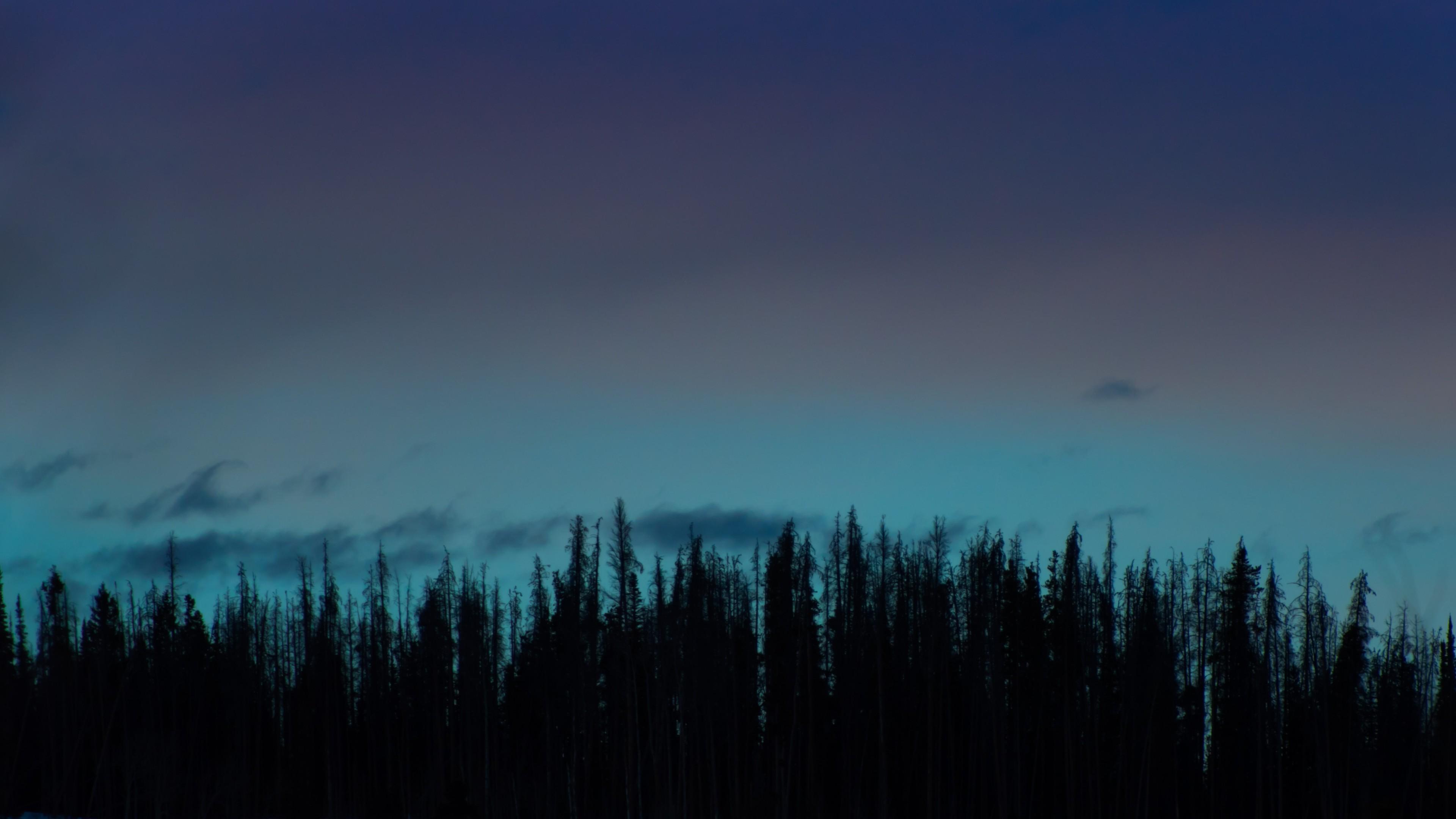 Wallpaper trees, night, sky