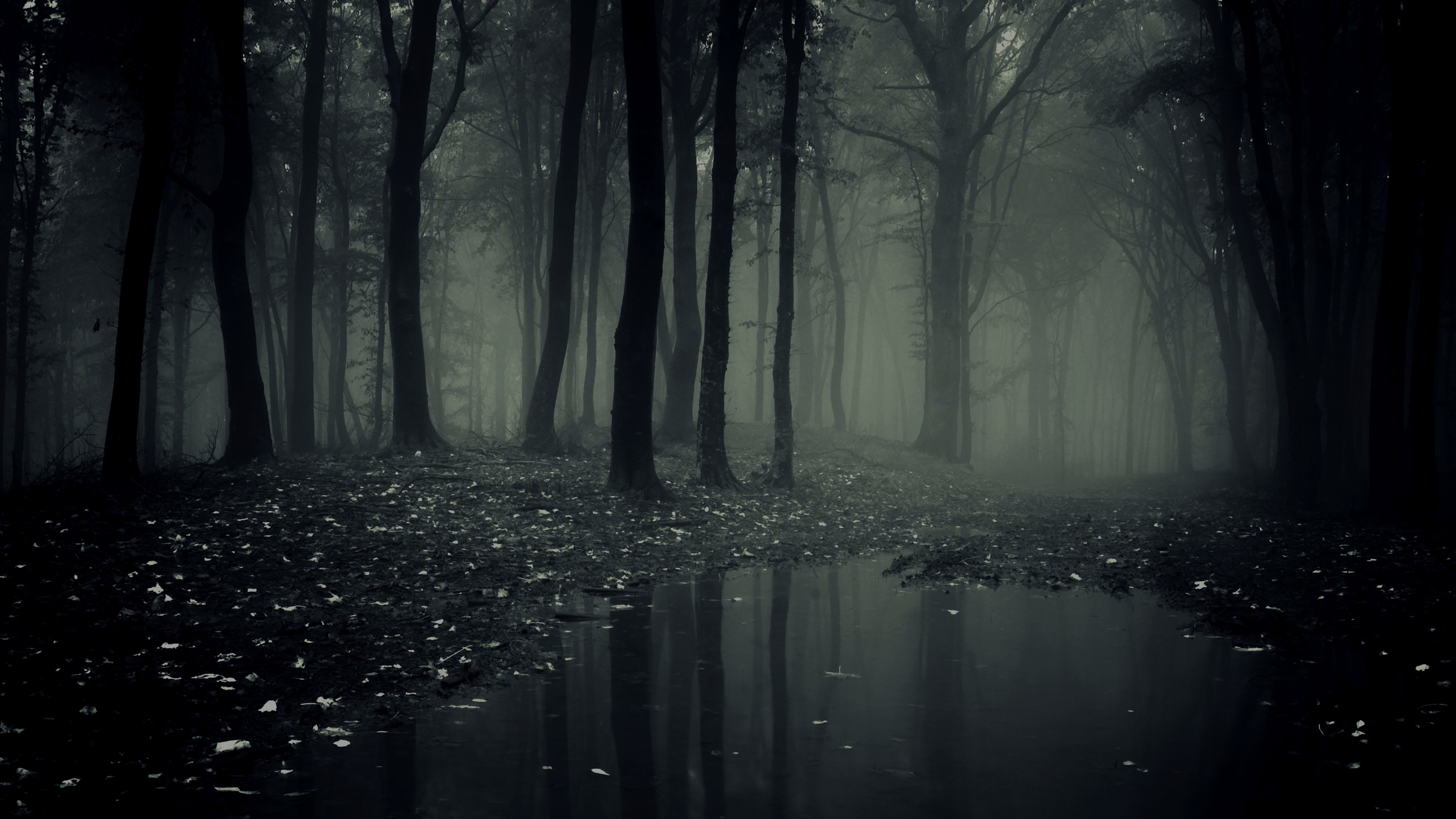 Explore and share Creepy Forest Wallpaper on WallpaperSafari