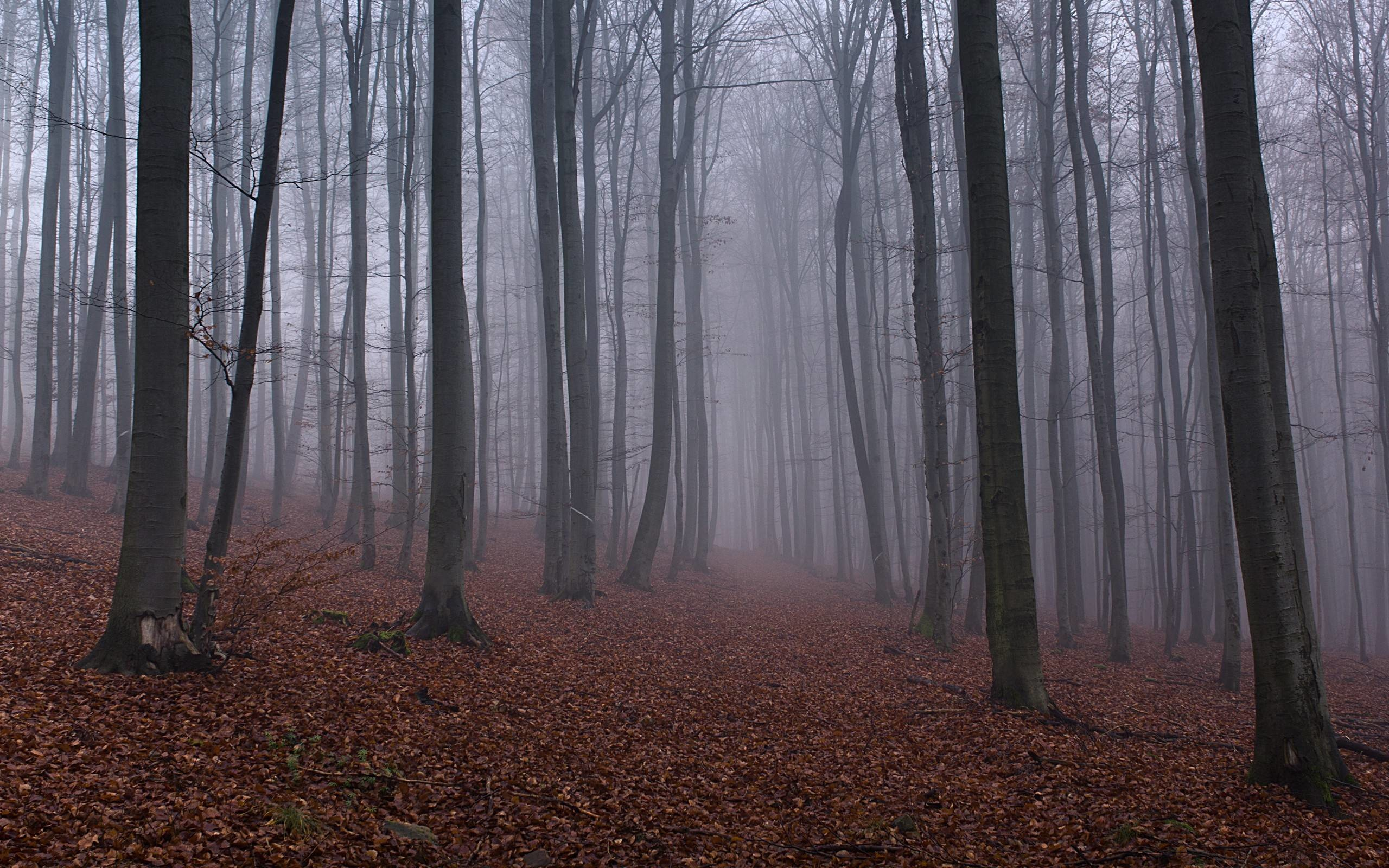 Free Woodland Misty Wallpapers, Free Woodland Misty HD Wallpapers .