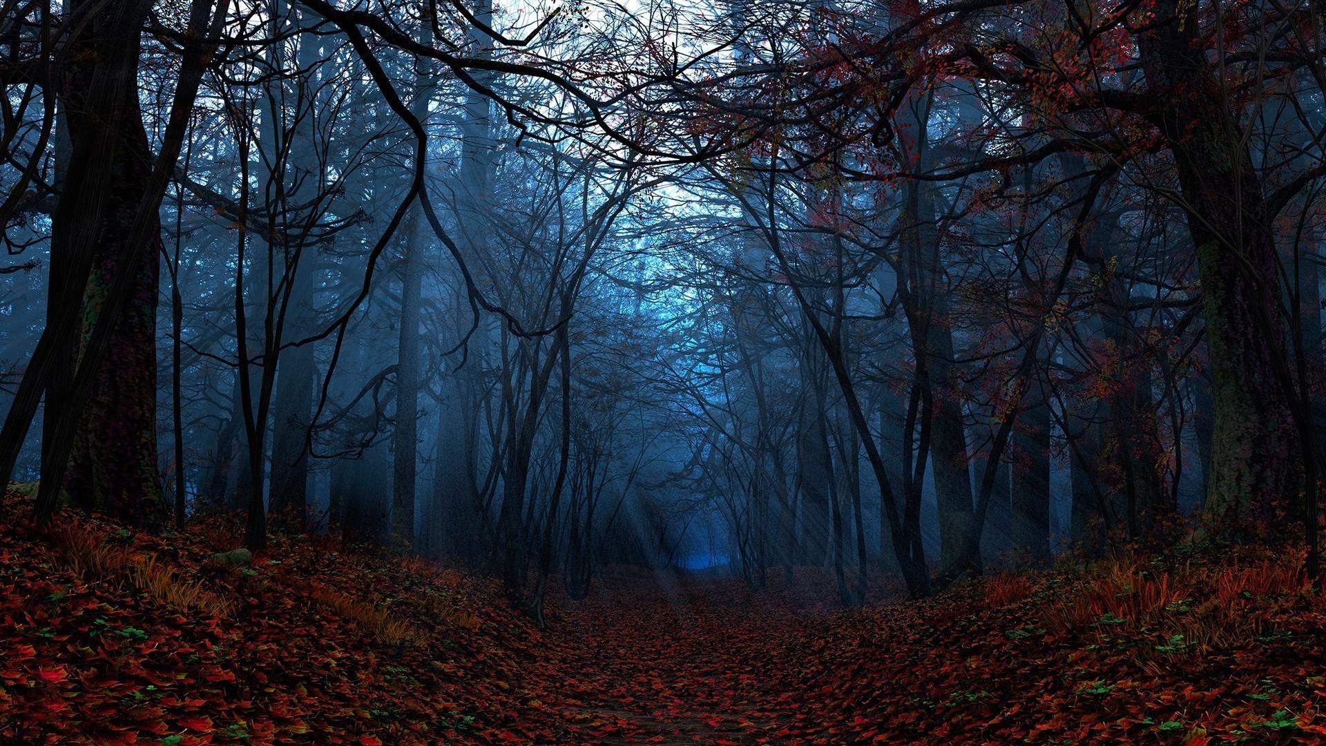 Path through the autumn forest wallpaper #14962