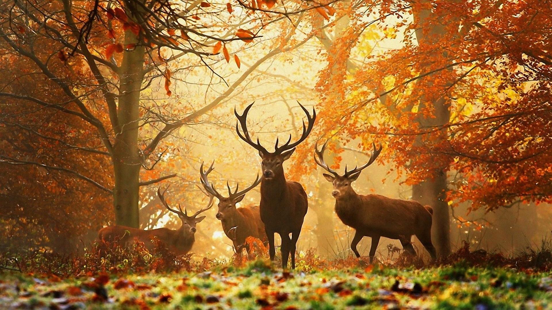 Autumn HD Wallpaper. Autumn HD Wallpaper 1920×1080
