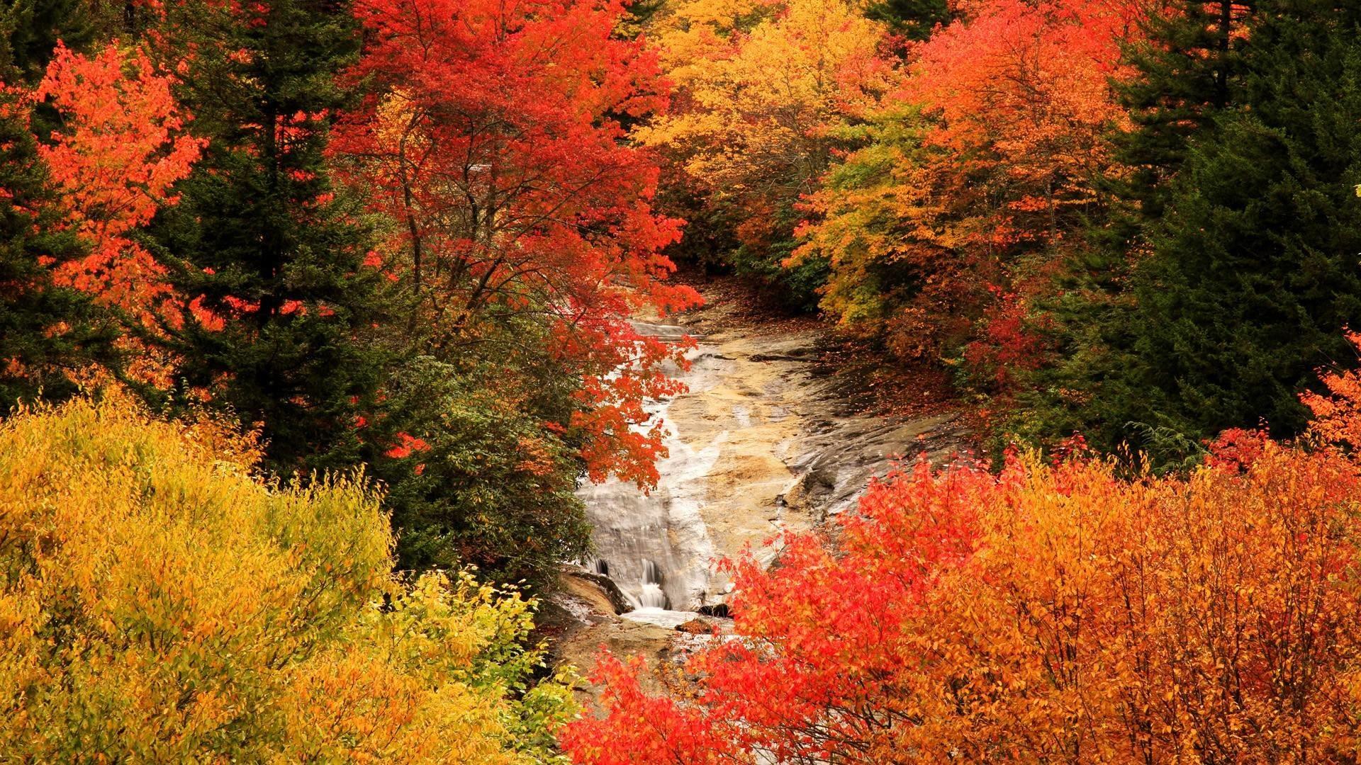 Download Blue Autumn Wallpaper   Wallpoper #413578