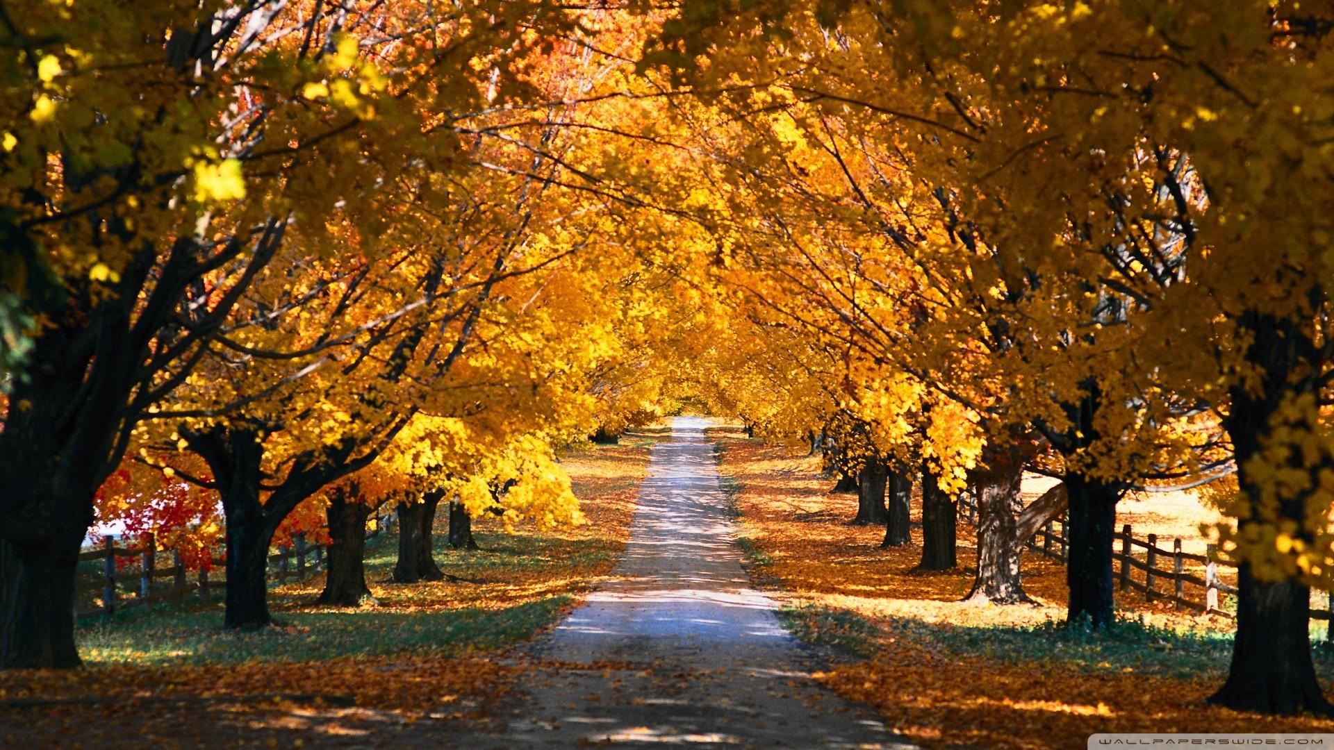 Tree Tunnel Road Autumn Wallpaper Tree, Tunnel, Road, Autumn