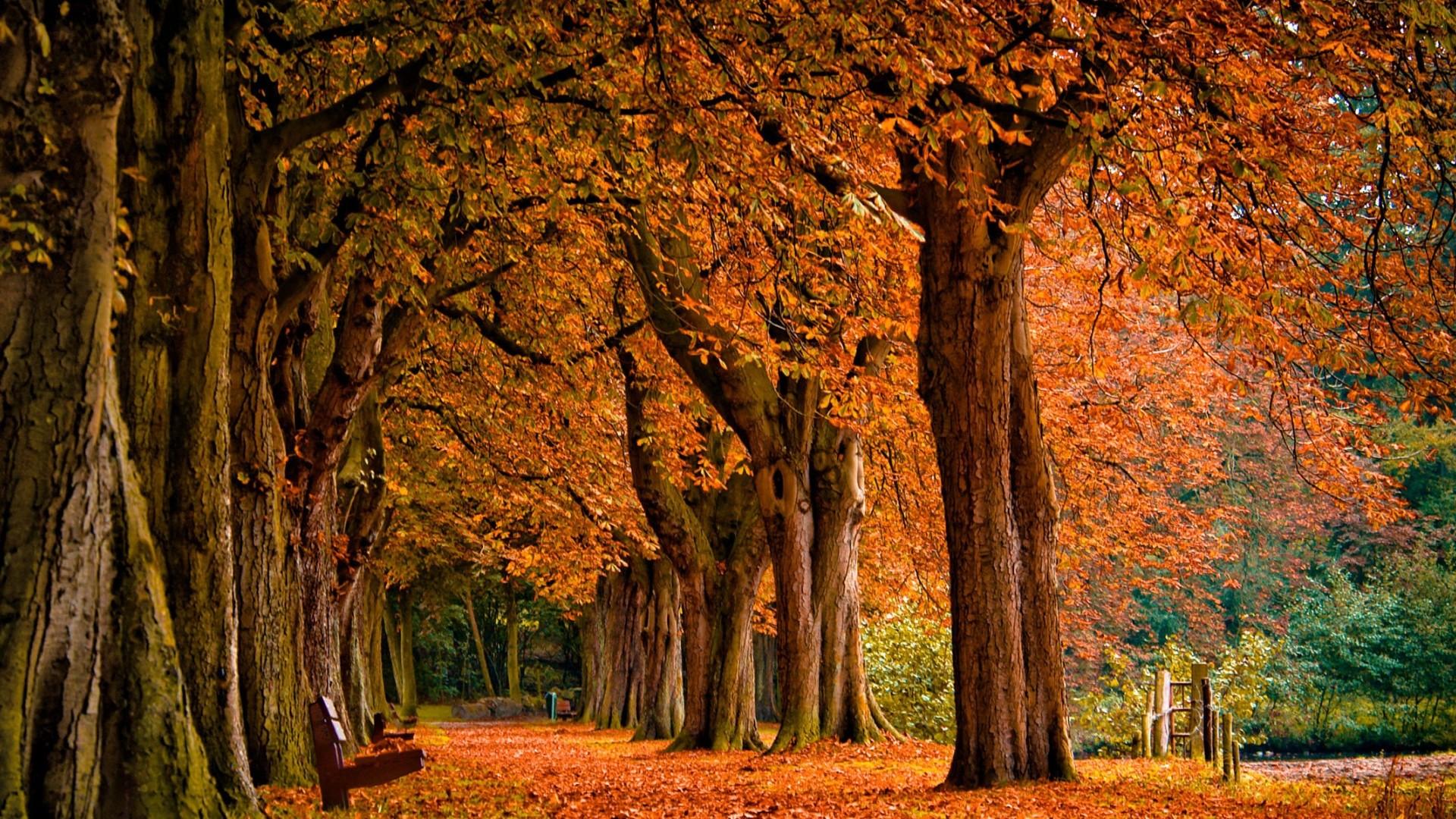 Autumn Background. Autumn Background 1920×1080