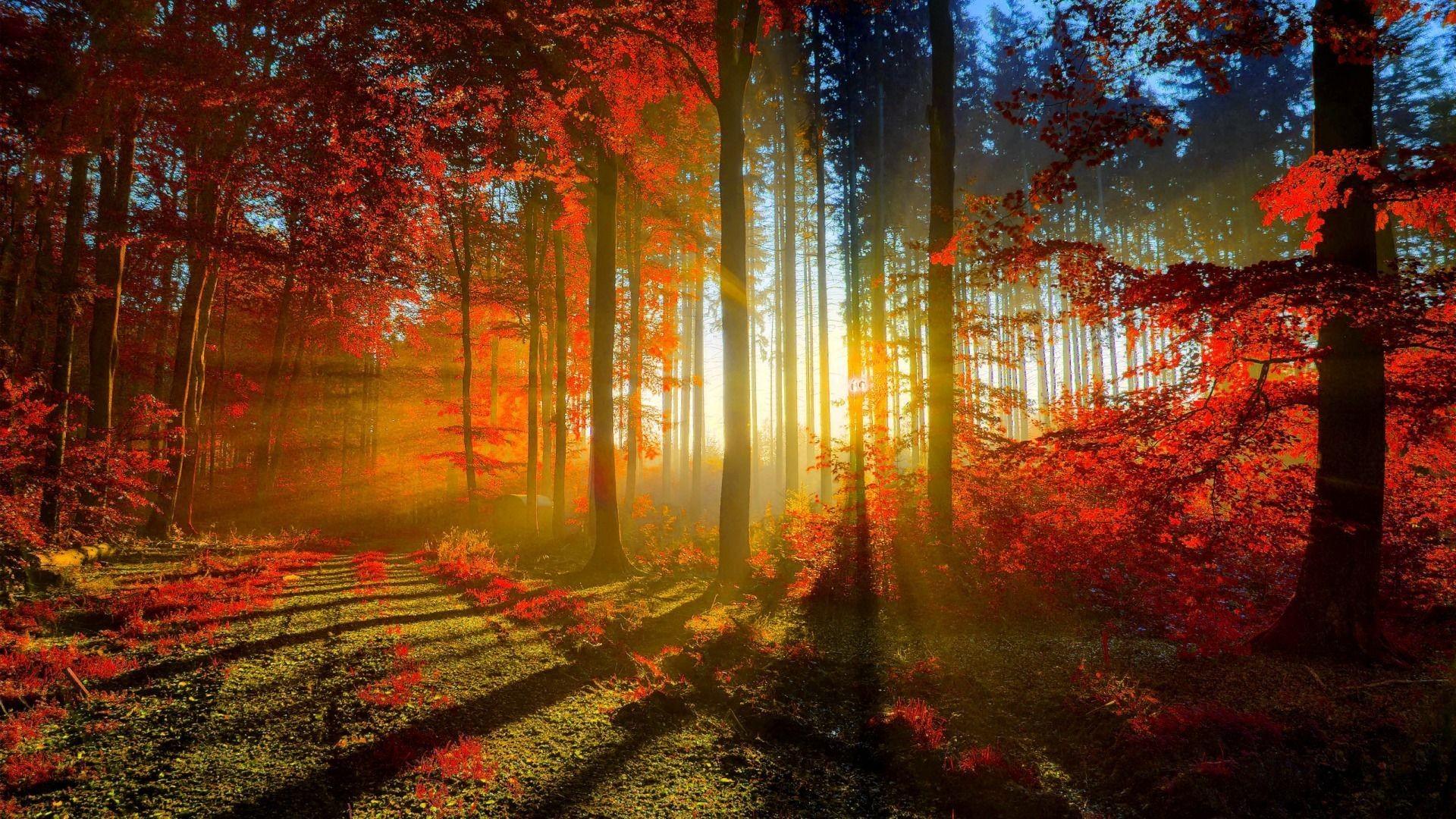HD Autumn ImageWallpaper Of HD Autumn ». DOWNLOAD Resolution: 380×250 –  1366×768 – …