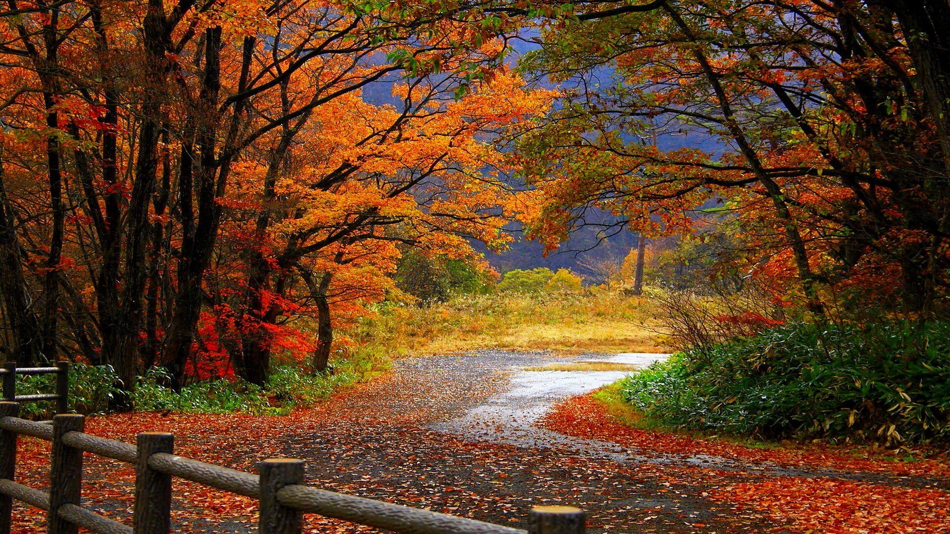 HD Autumn Wallpapers