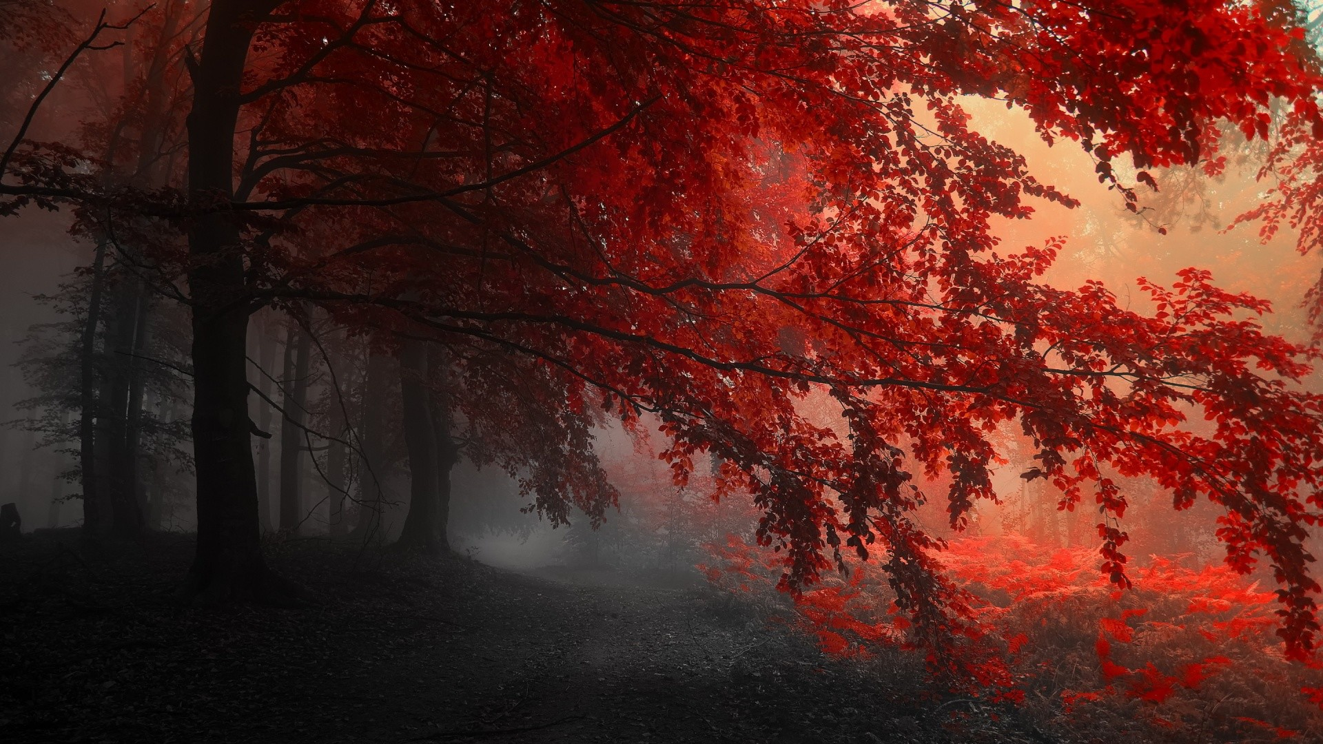 Red – HD Widescreen Backgrounds