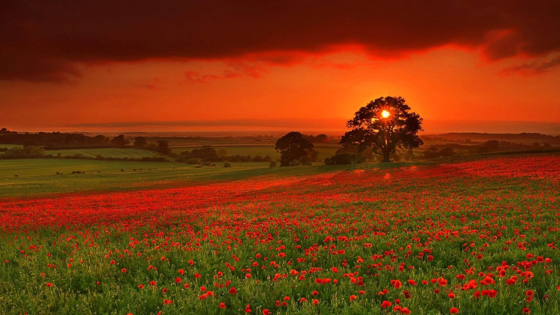 Wallpaper autumn, sun, flowers, orange, red