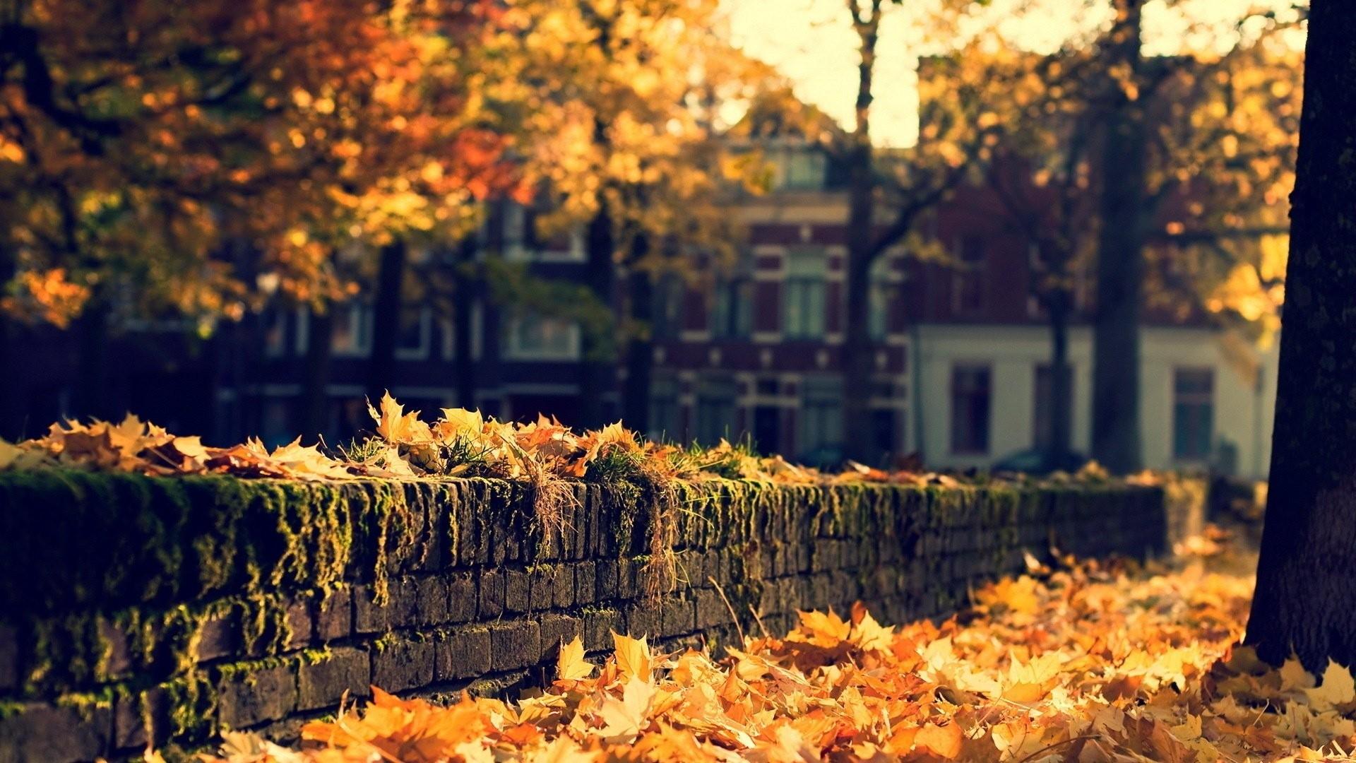 City Autumn Nature Street Beauty Hd Wallpapers – 1920×1080