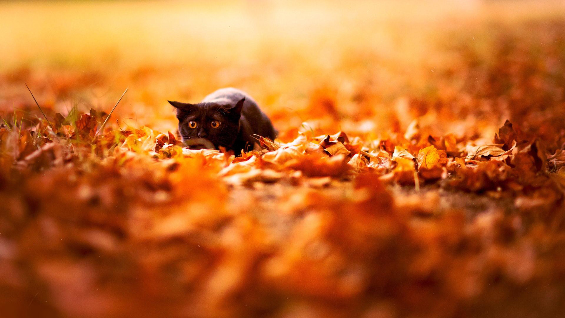 Fall Desktop Wallpaper Hd Autumn leaves …