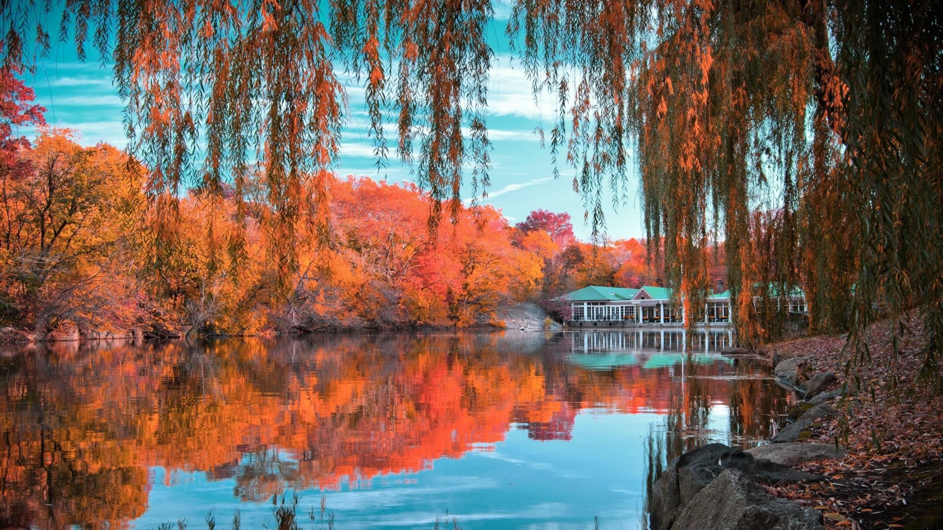 Wallpaper central park, new york, autumn, beautiful landscape