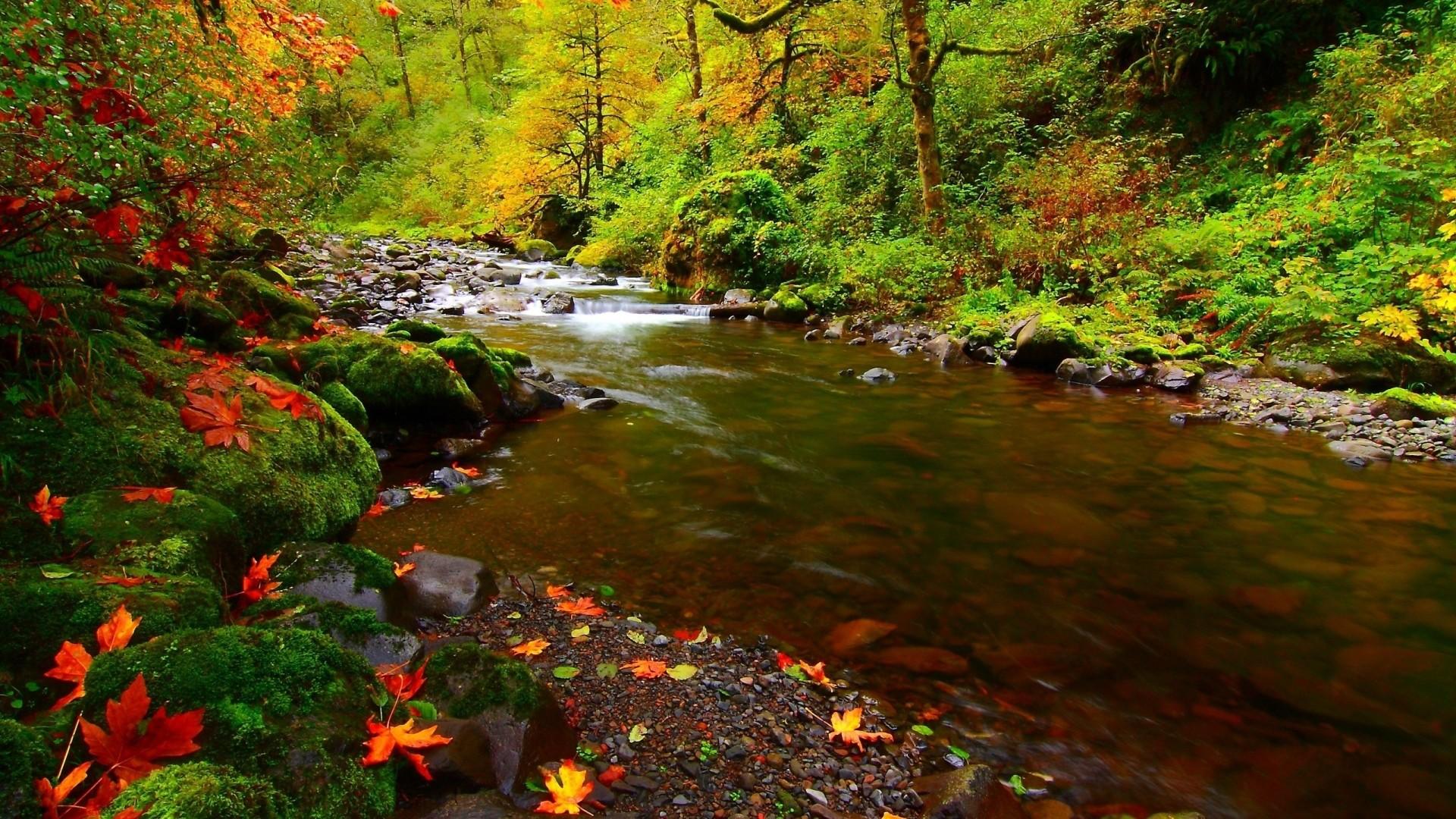 Wallpaper river, rocks, leaves, autumn