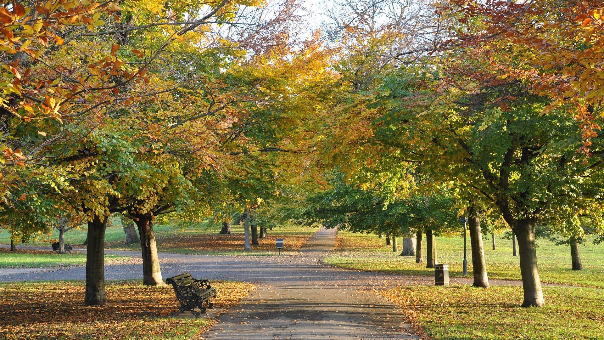 Autumn Nature wallpaper – 268462