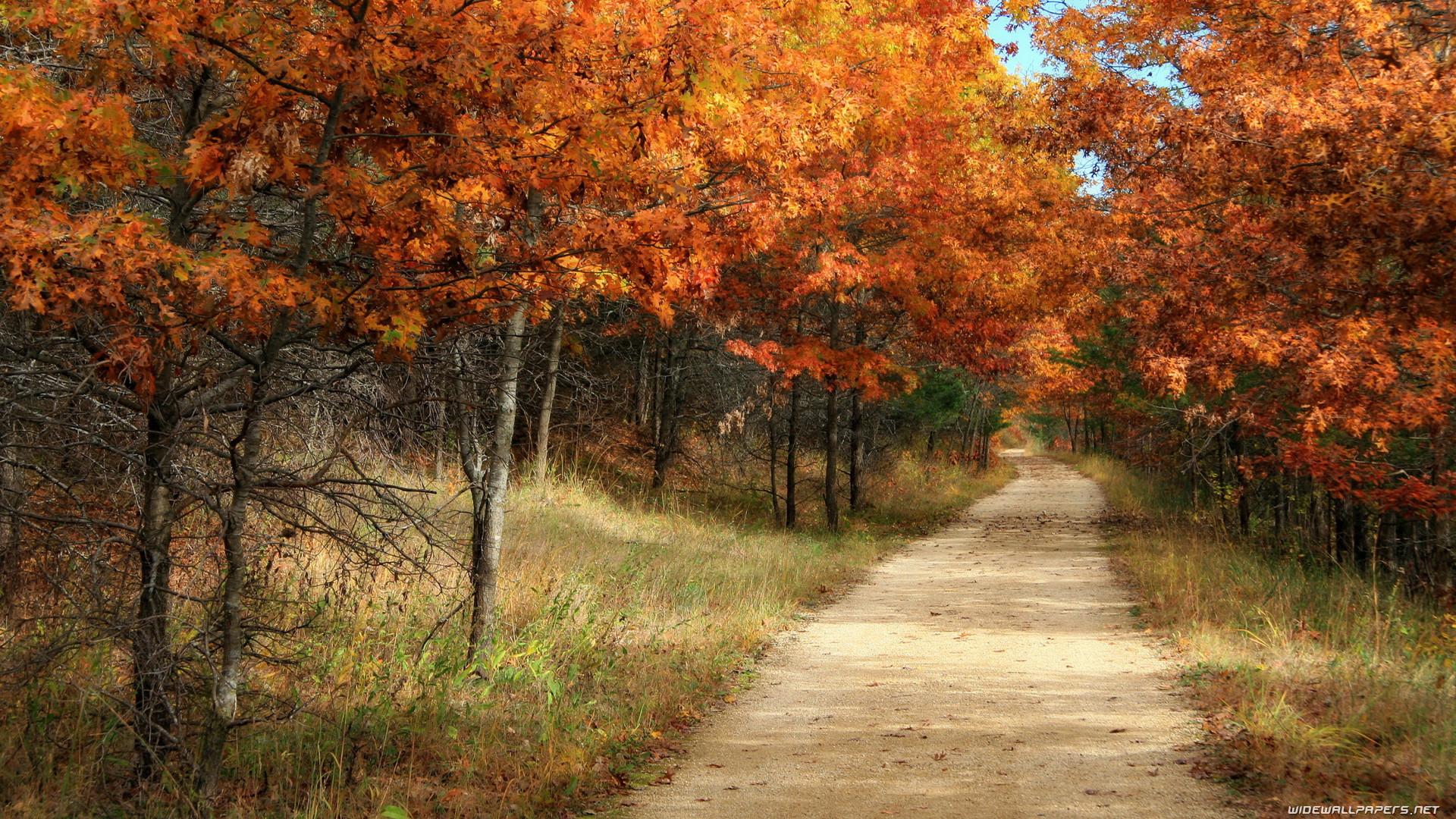 Autumn wallpapers …