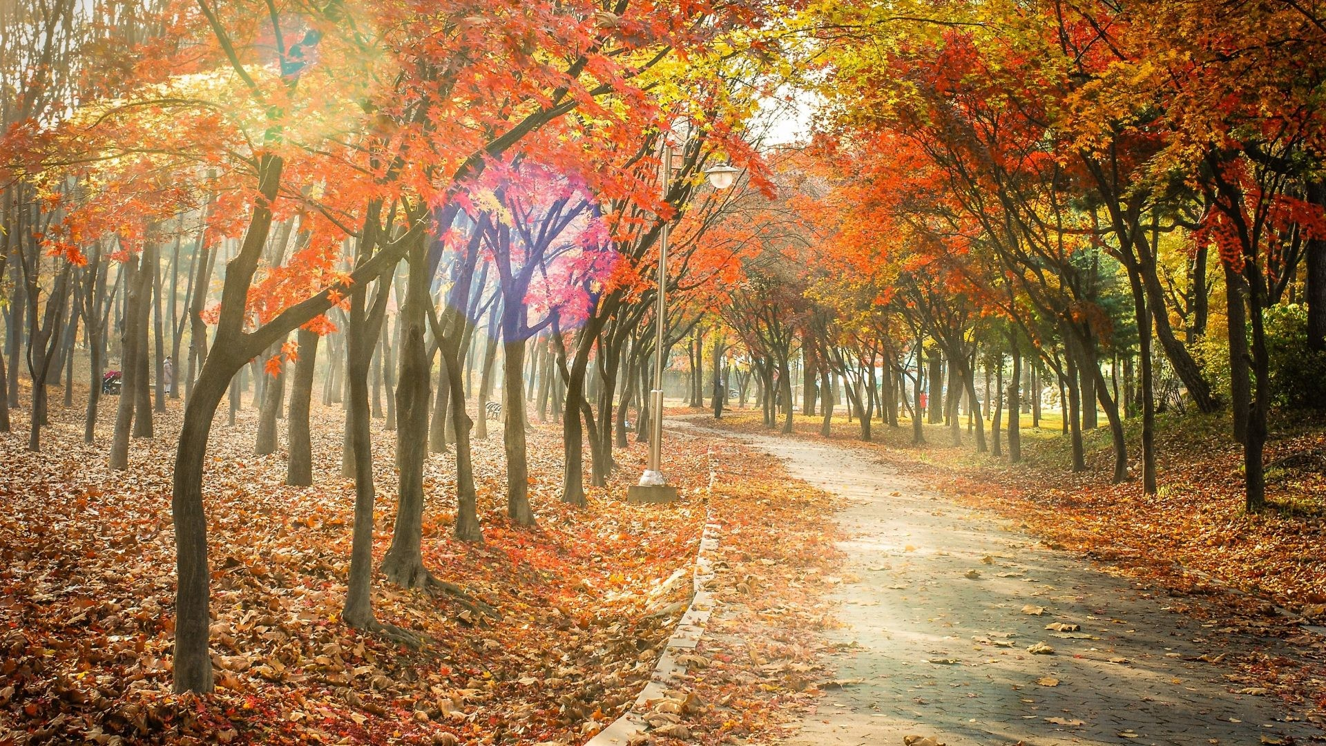 Leaf Tag – Trail Tree Leaves Fall Landscape Leaf Road Nature Autumn Forest  Path Best Picture