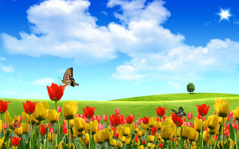 … Field Of Flowers Wallpaper Screensavers