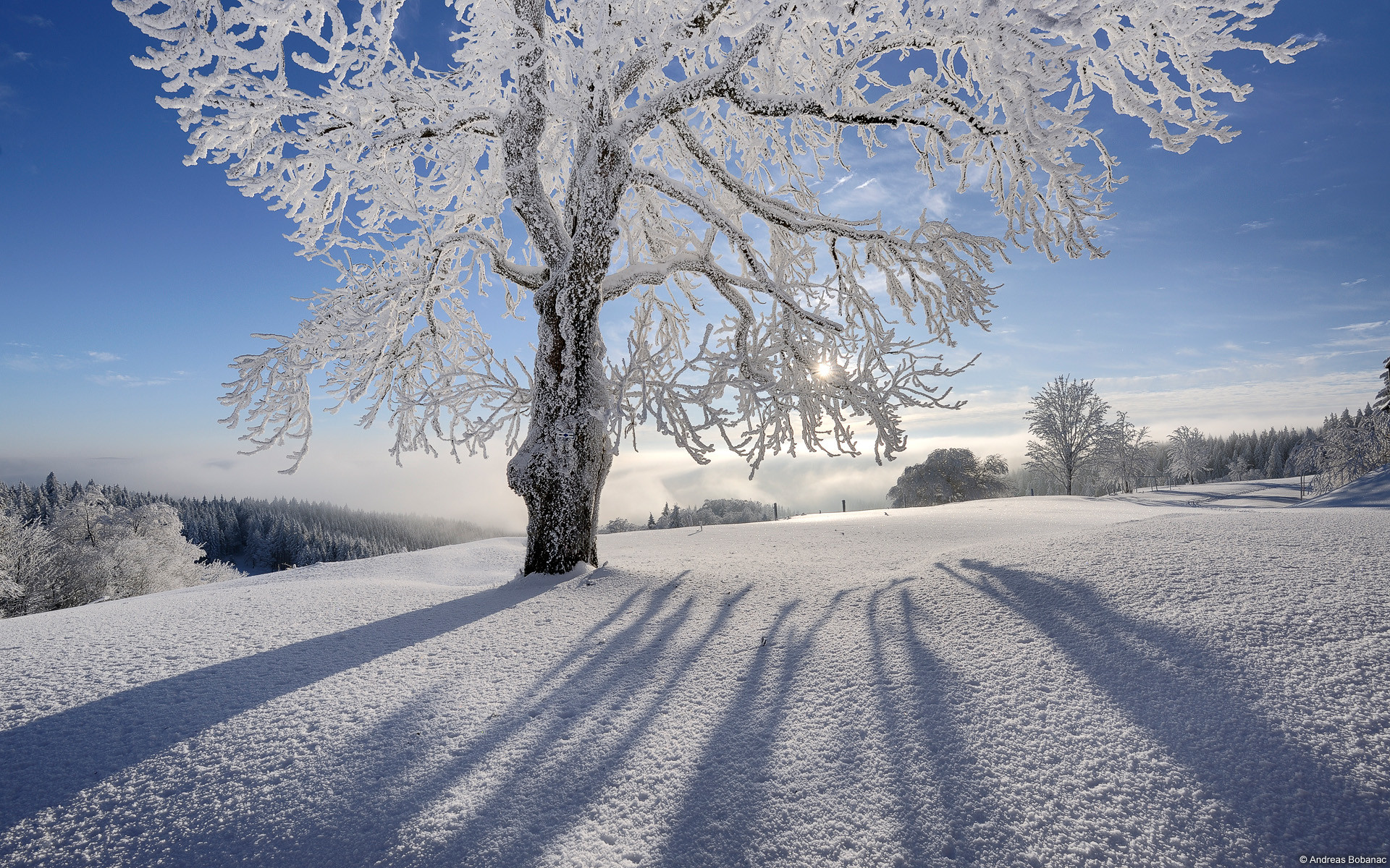 Winter and Christmas desktop backgrounds | HD Wallpapers