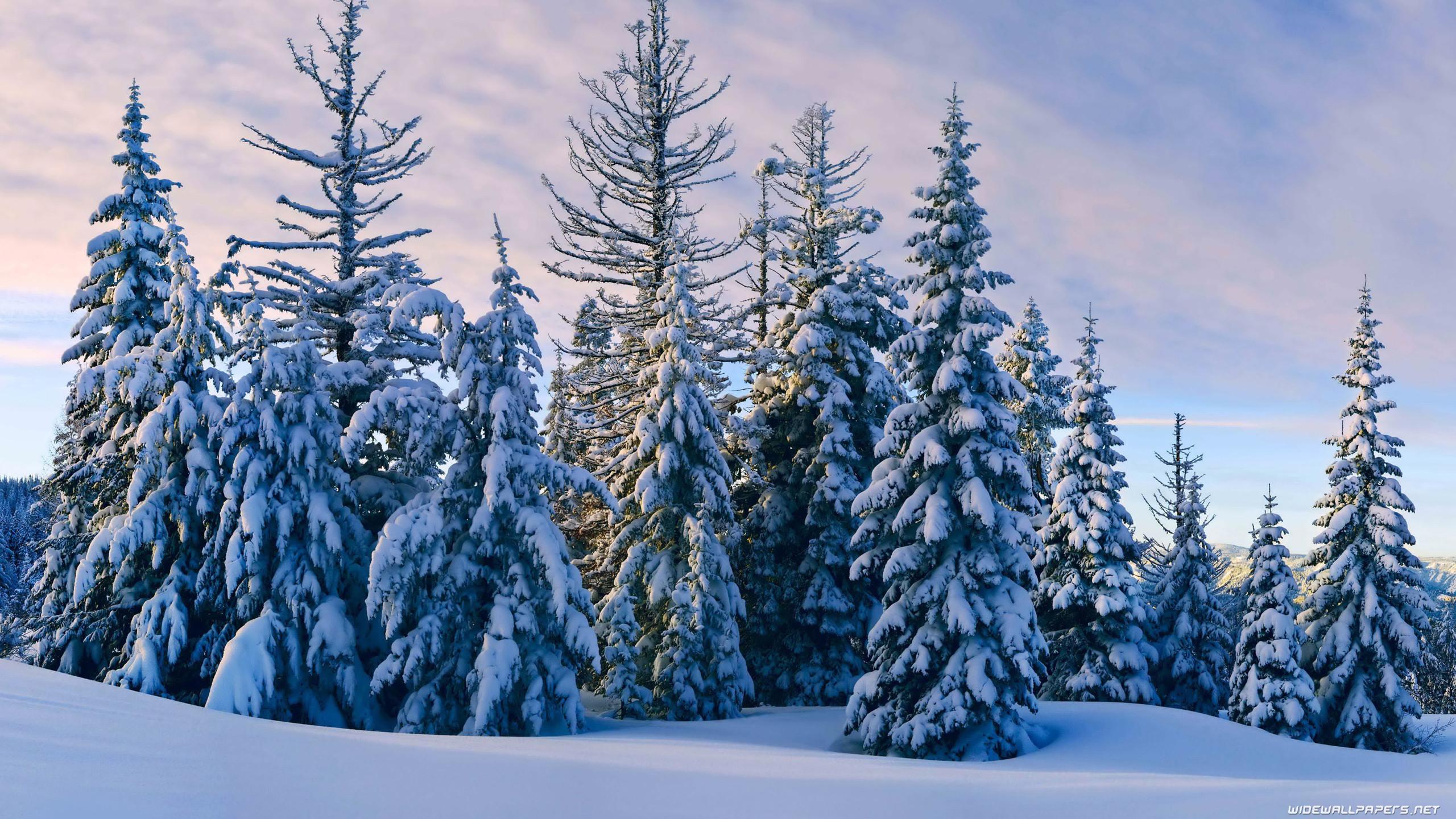Winter 2560×1600 3840×2160