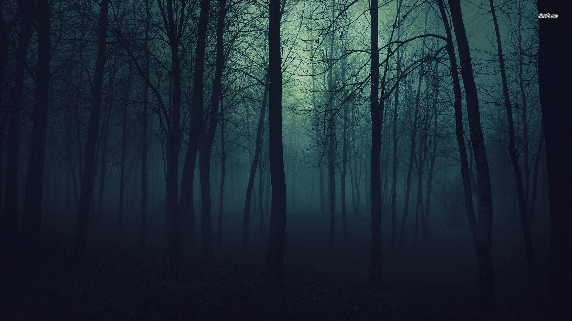 filter, Nature, Forest Wallpapers HD / Desktop and Mobile Backgrounds