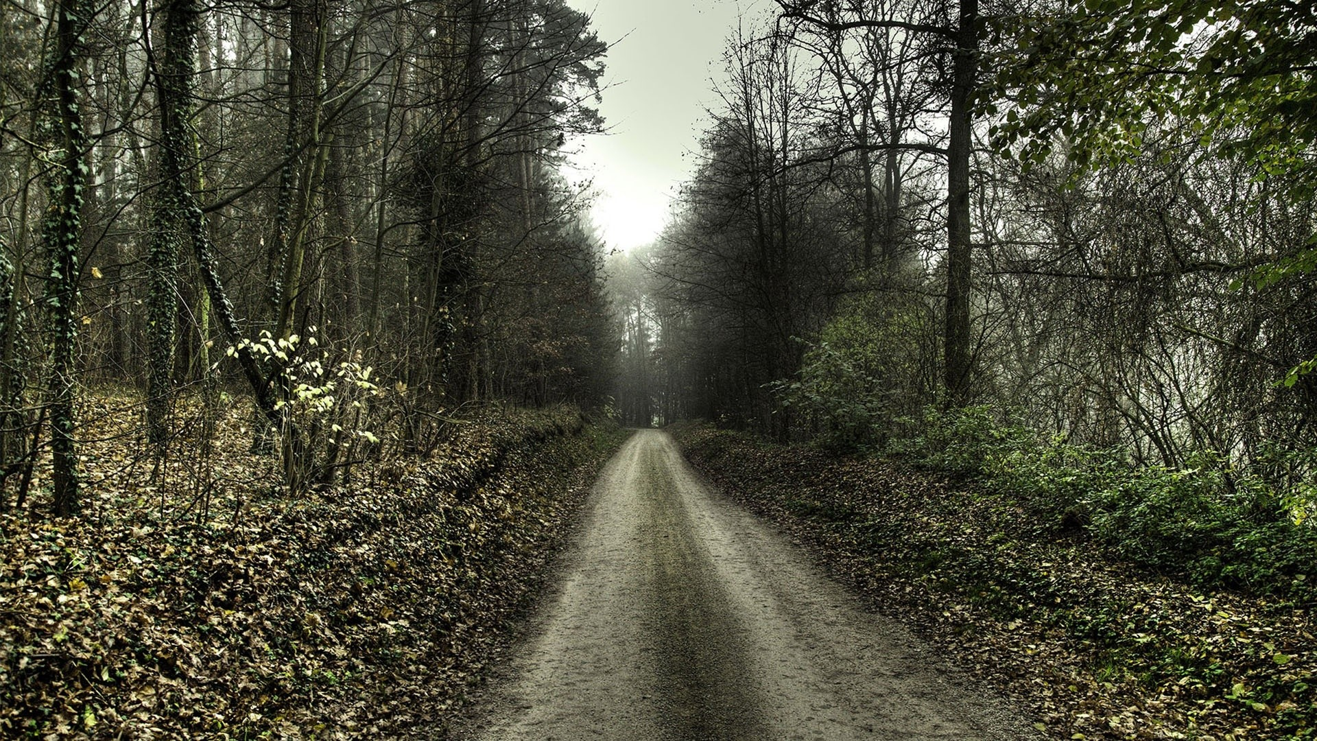 25 best ideas about <b>Haunted forest</b> on Pinterest |