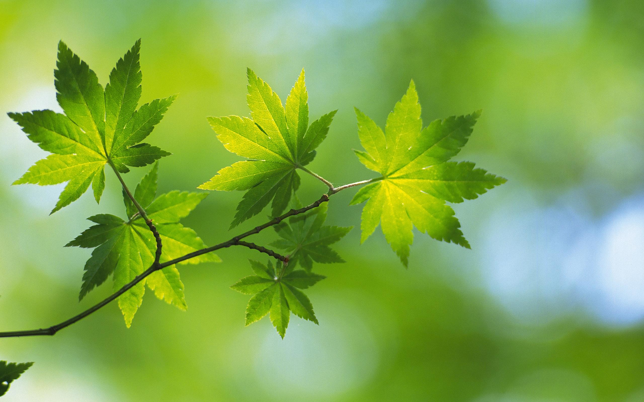 Green Nature HD Wallpapers.