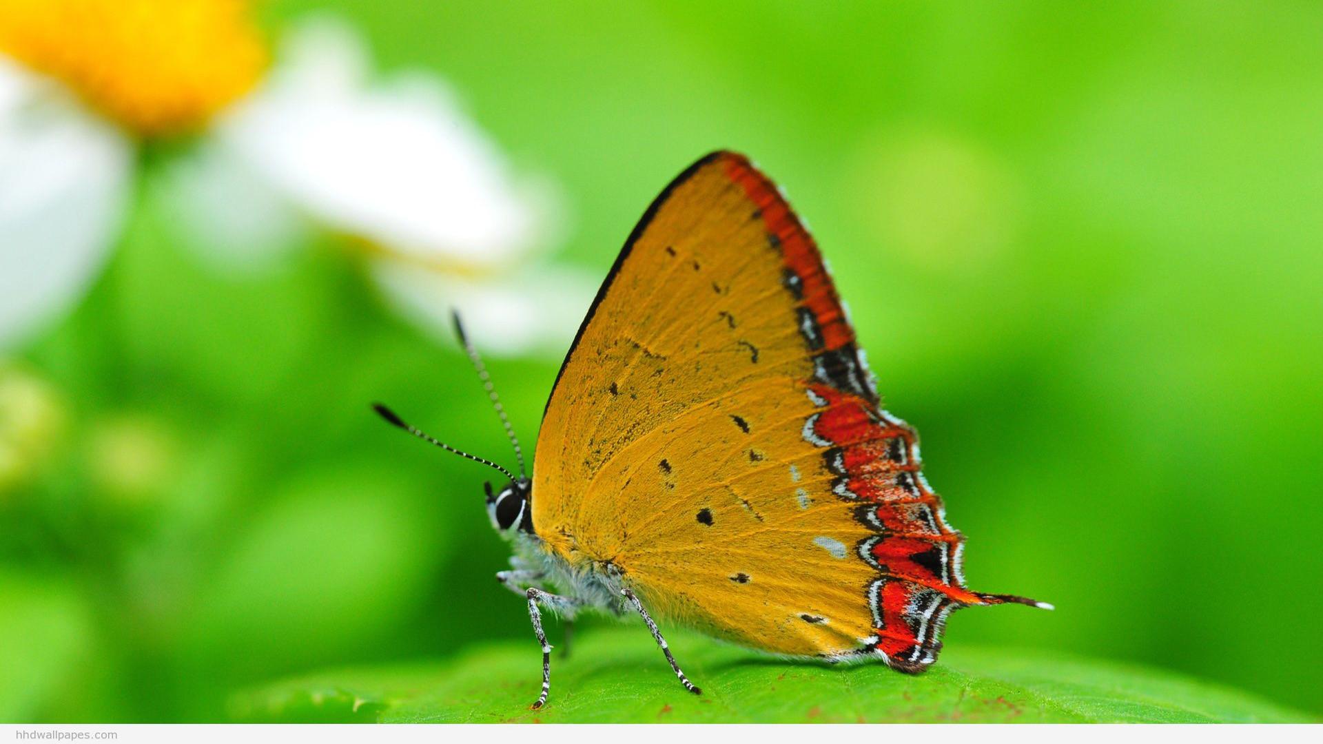 … Full HD Nature Wallpapers 1080p Desktop with Macro Photo of .