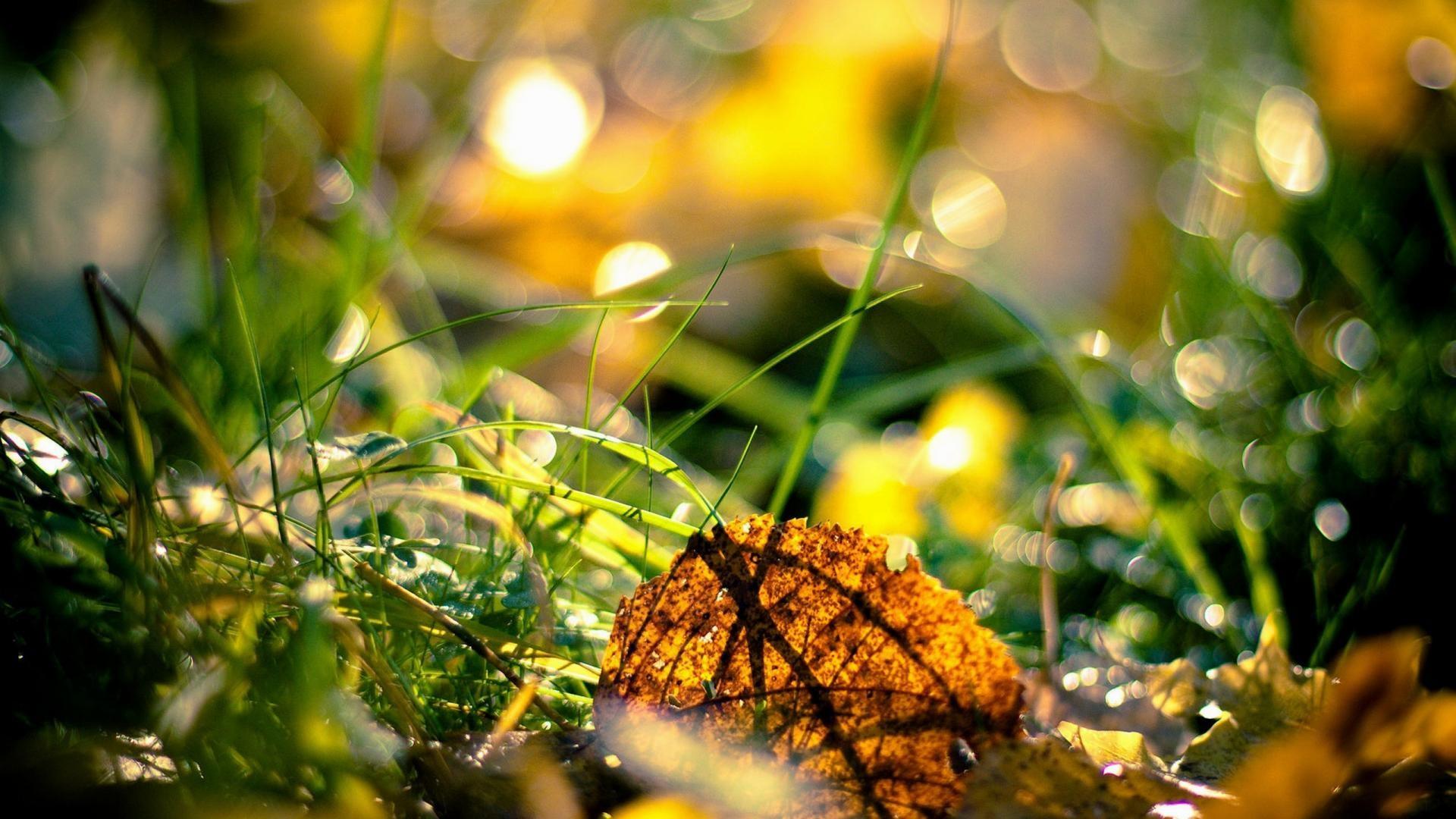 wallpaper.wiki-Autumn-fresh-season-1080p-hd-pictures-