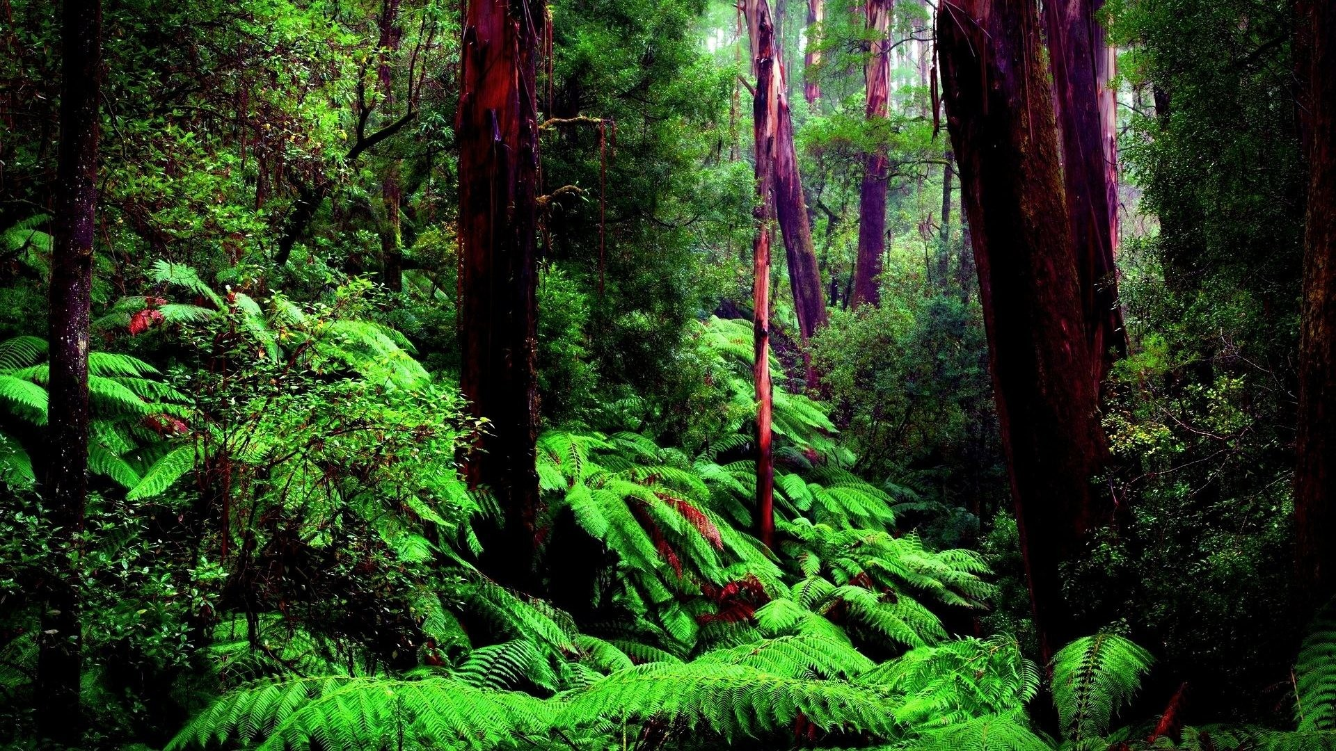 Amazon Tag – Amazon Nature Wallpapers Hd Photos for HD 16:9 High Definition  1080p