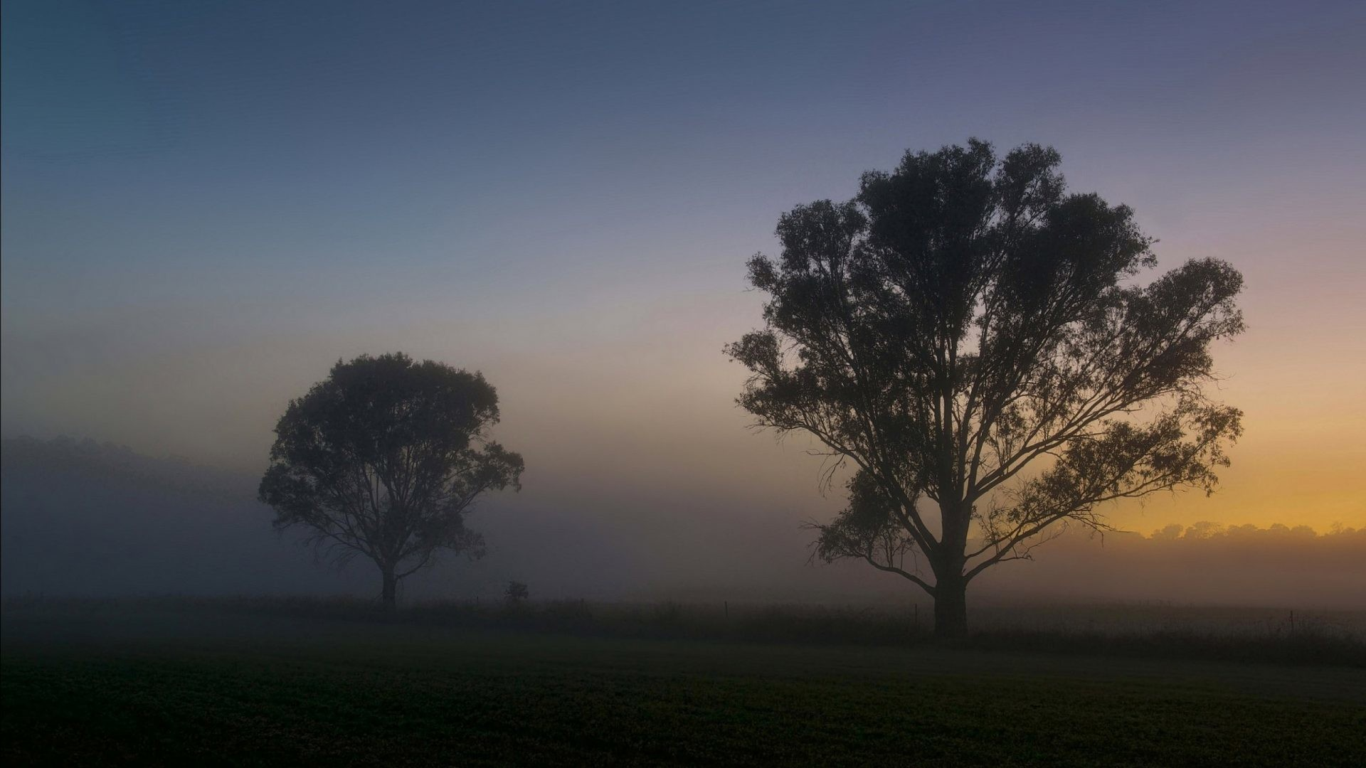 Trees – Fog Landscape Lonely Tree Nature Pictures Of Beauty for HD 16:9 High