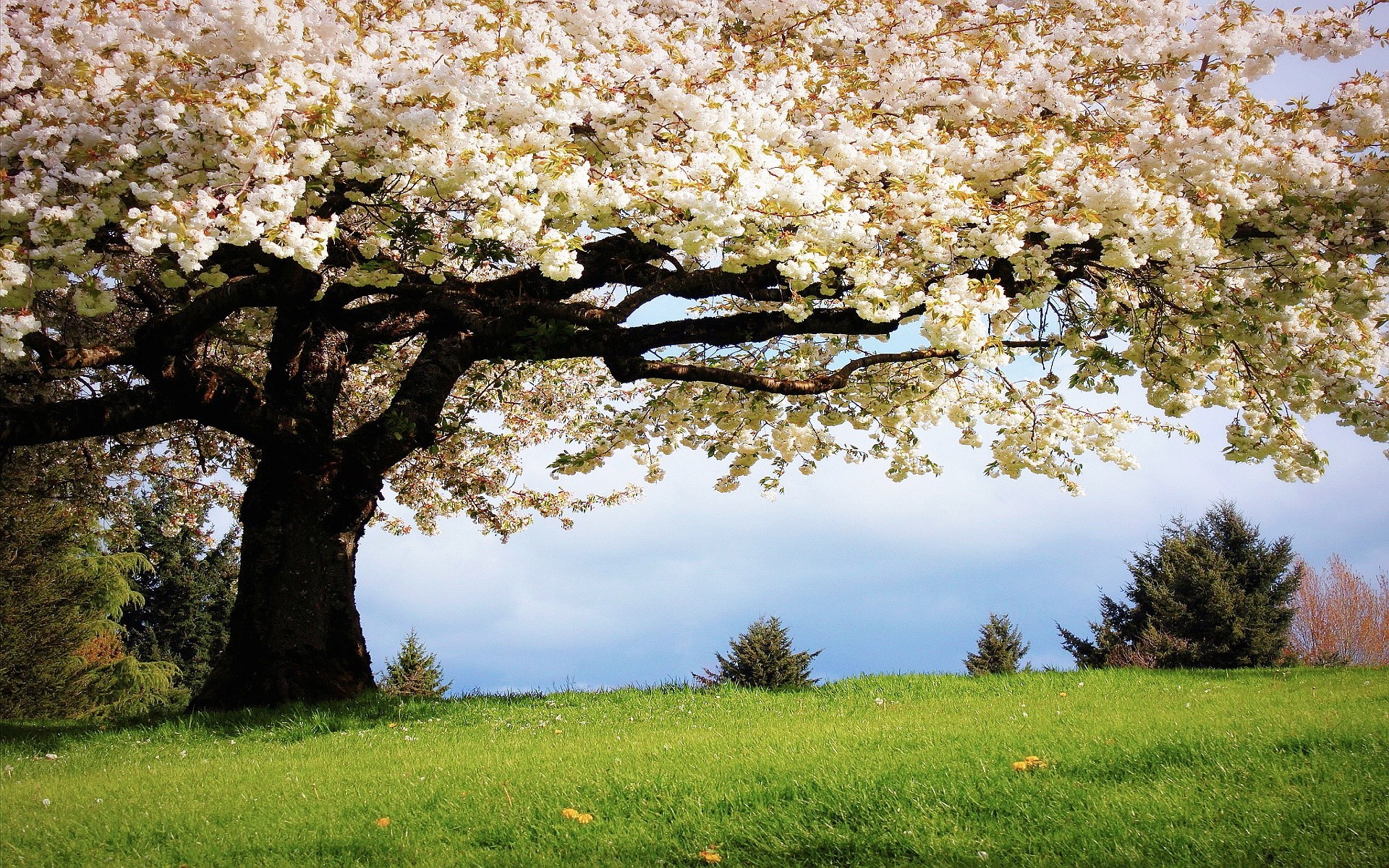Spring Wallpapers | HD Wallpapers Early