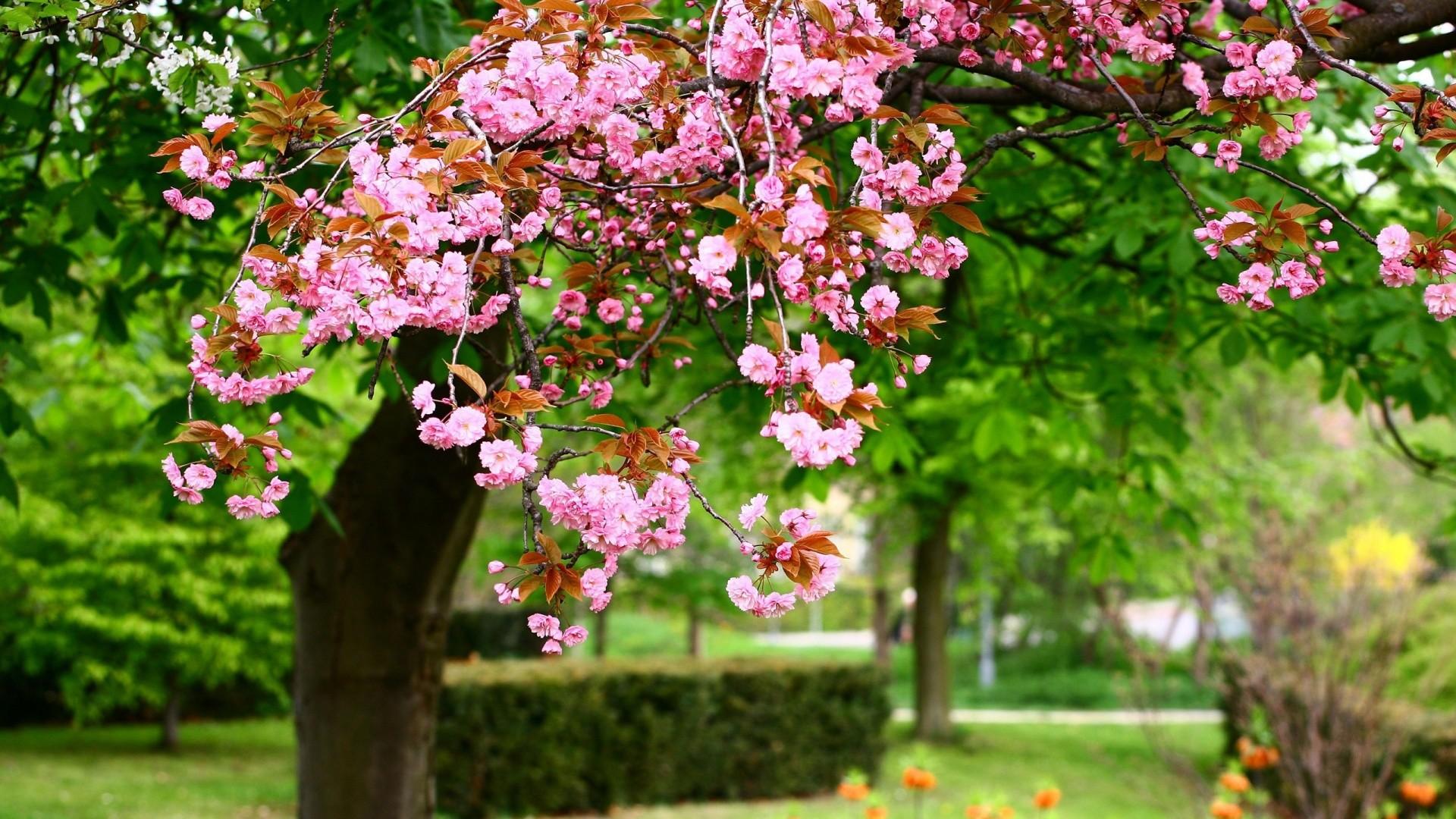 Spring-HD-Desktop-Wallpaper-Download