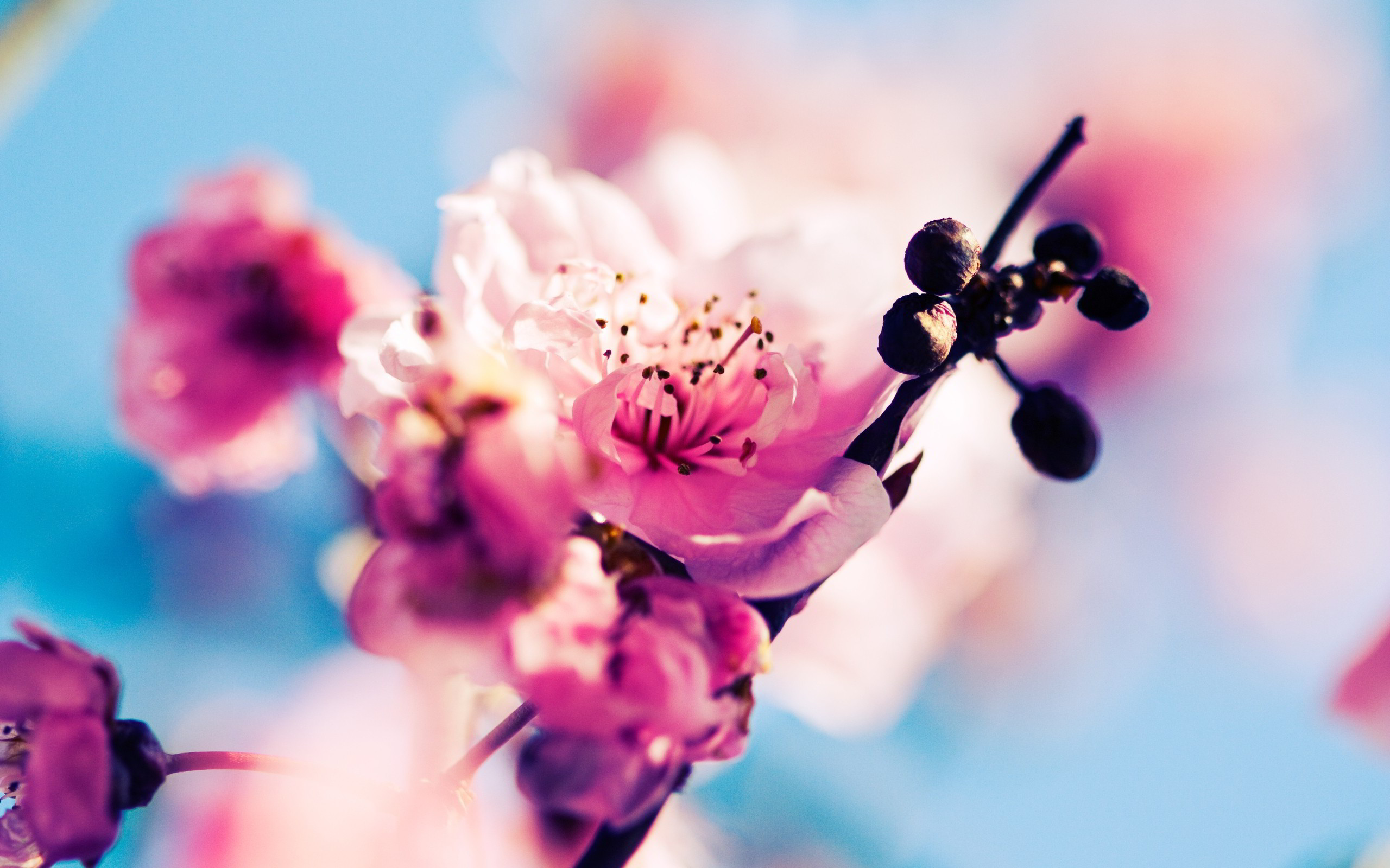 Collection Of Wallpaper Spring On HDWallpapers