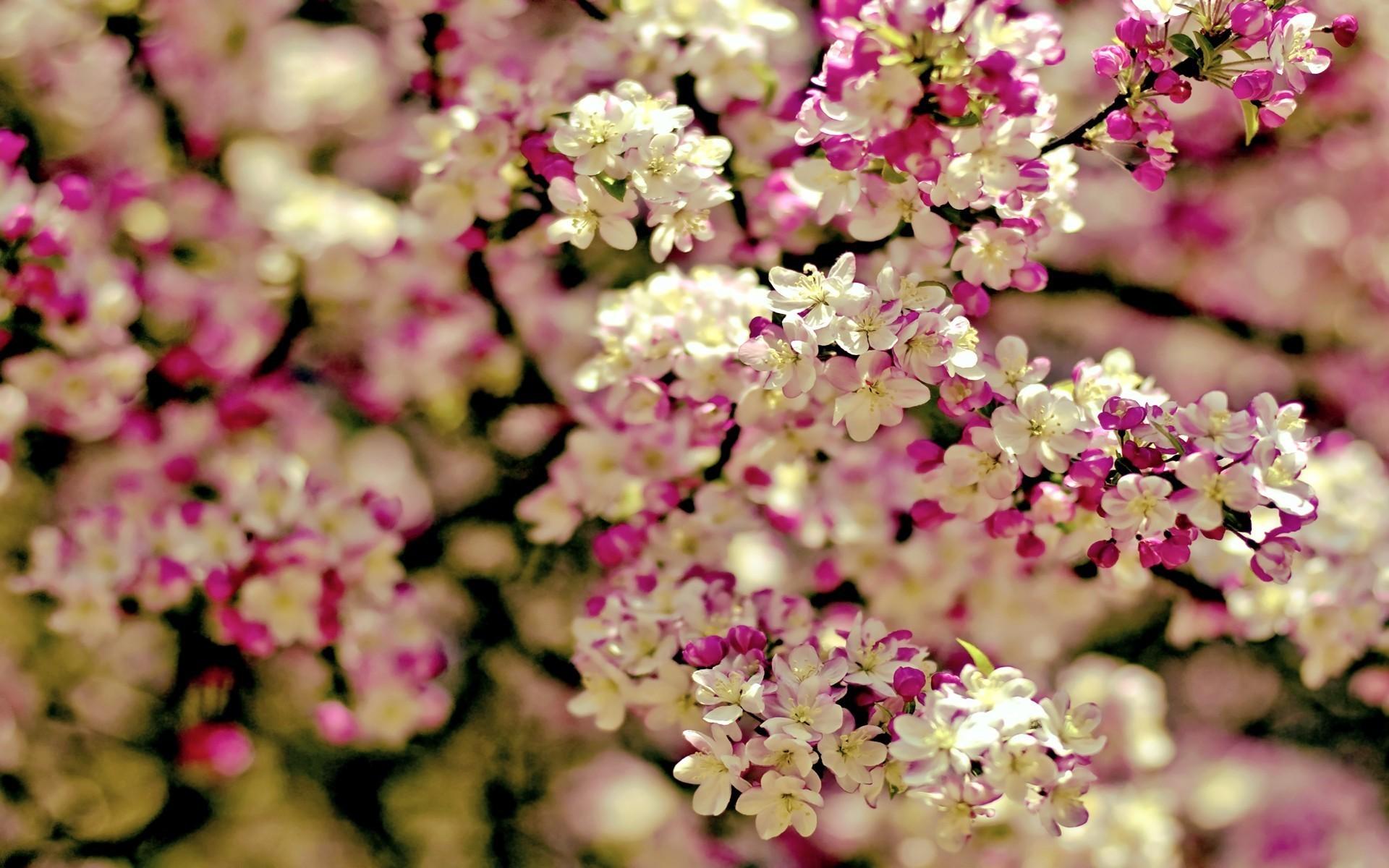 Spring Flowers Background | wallpaper spring tree flowers categories  flowers downloads 3199 added .