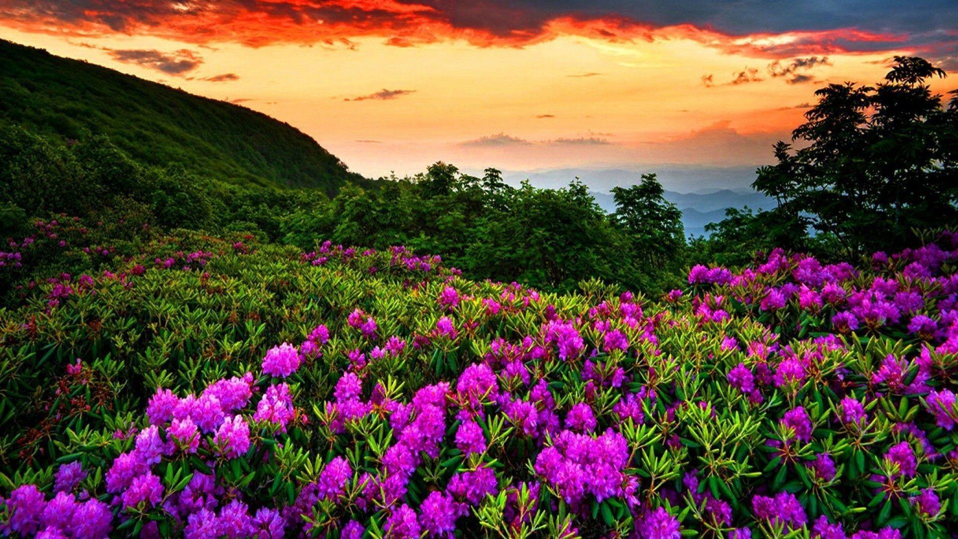 Beautiful Nature Wallpaper Spring