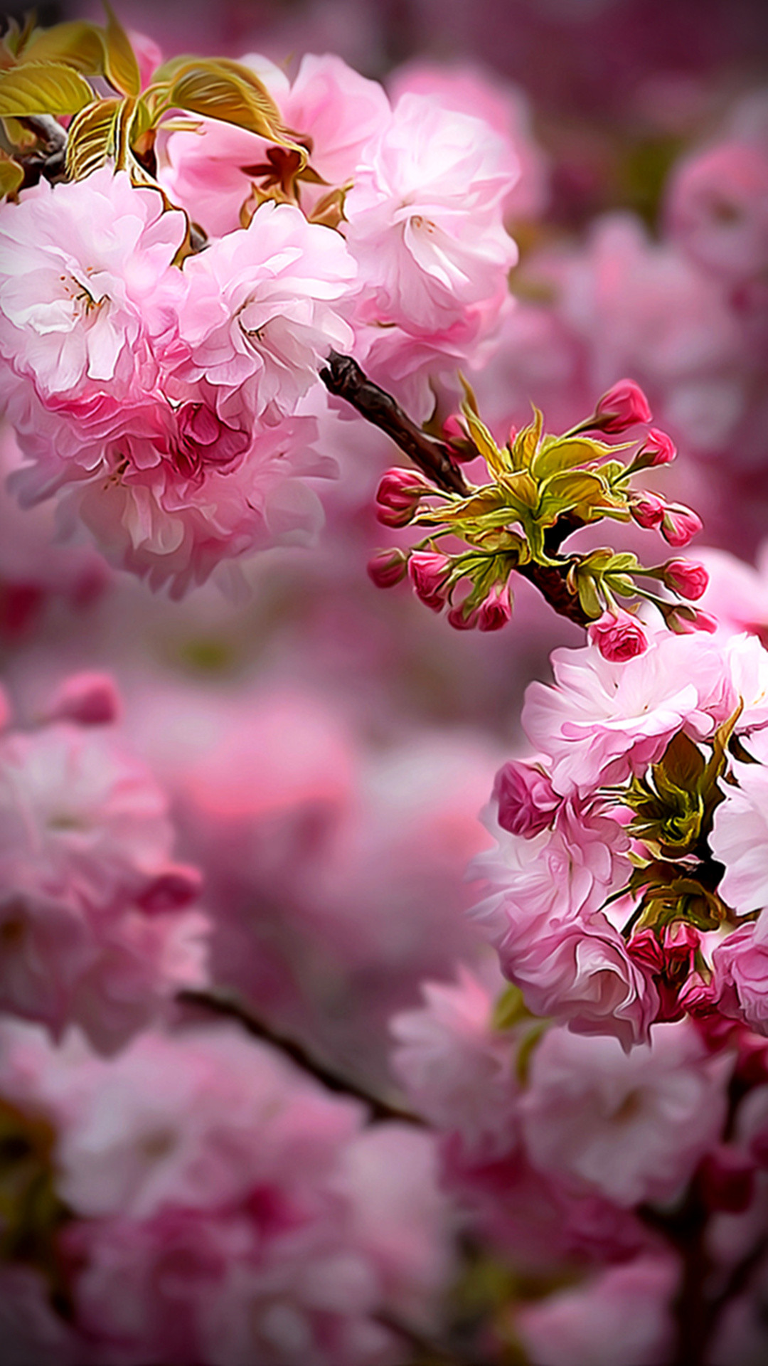 https://www.vactualpapers.com/gallery/spring-flowers-