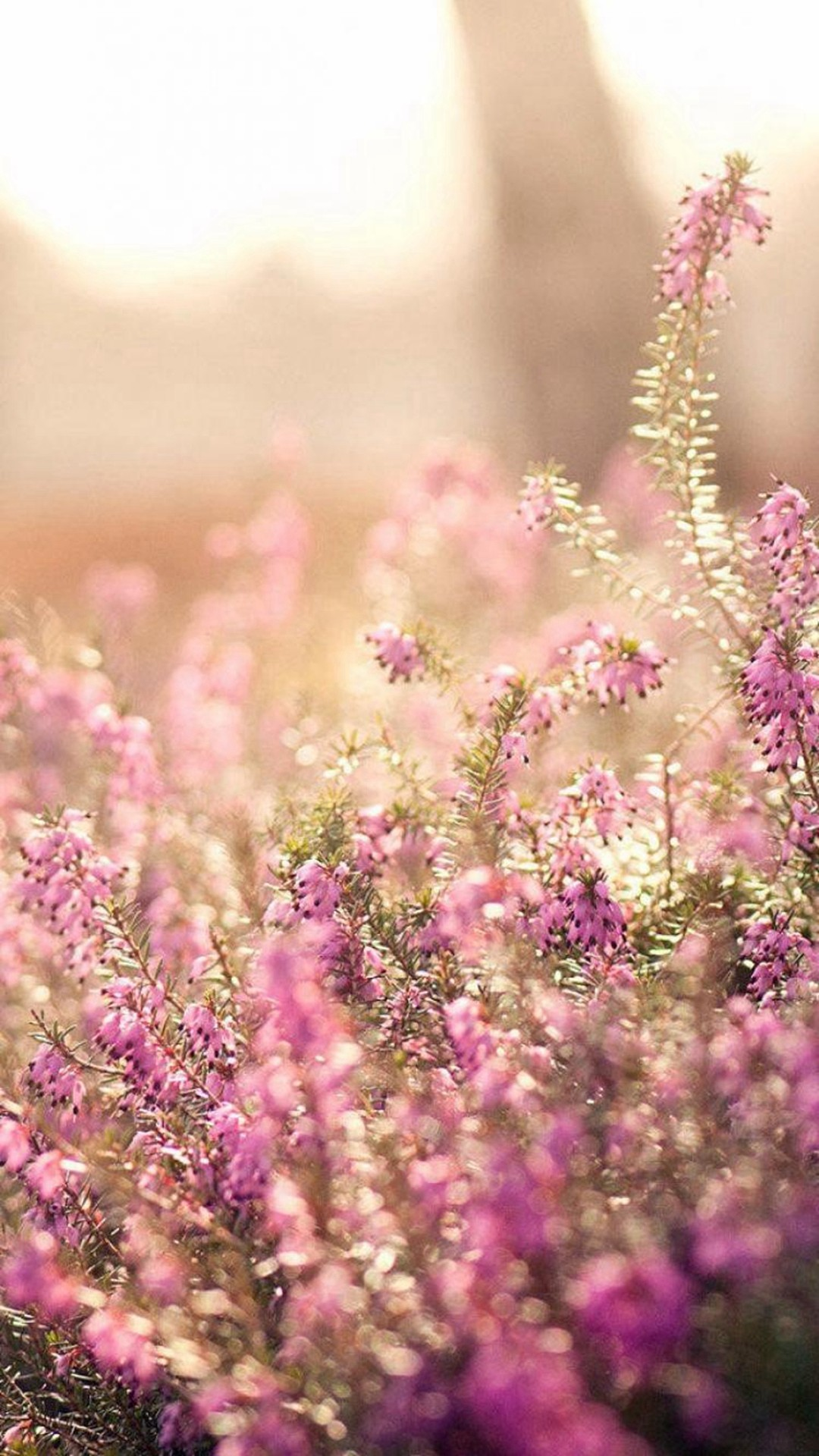 Nature Spring Bloomy Flowers Blurry iPhone 6 wallpaper