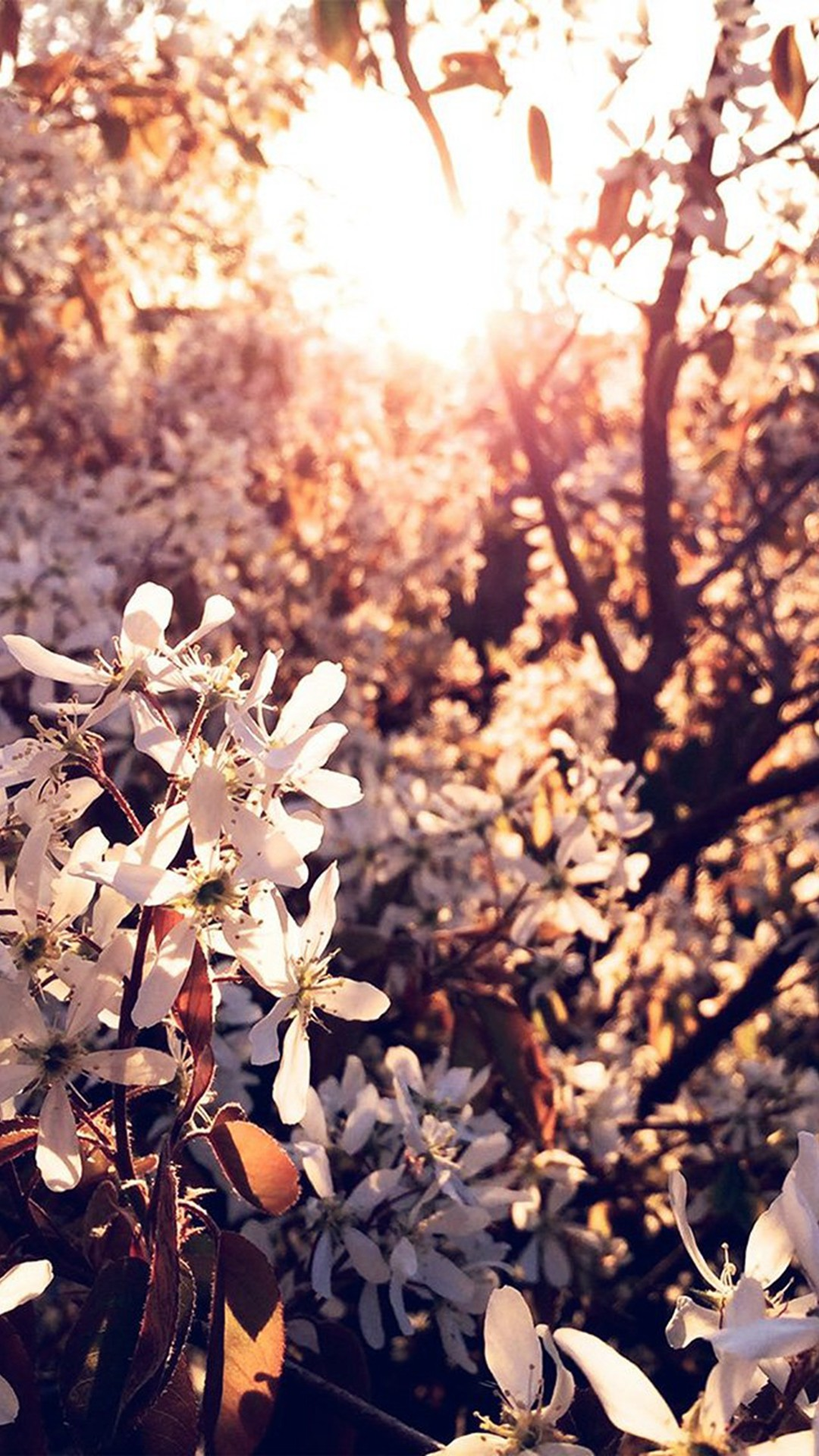Tree Flower Blossom Spring Nature iPhone 6 wallpaper