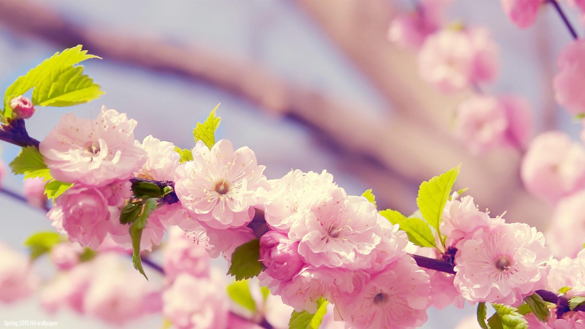spring romantic flower wallpapers hd – https://69hdwallpapers.com/spring-