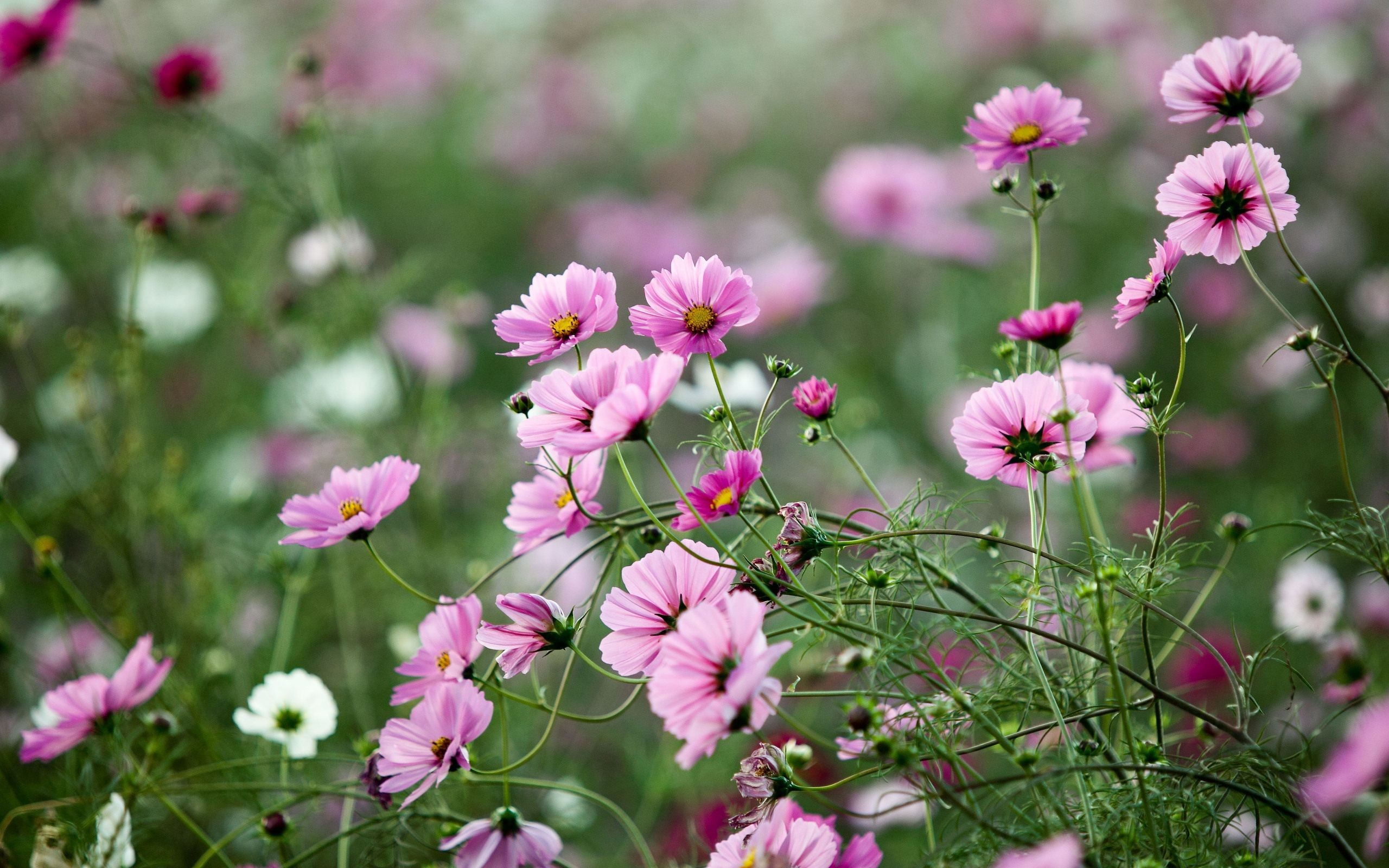 Flower Wallpapers Pink Mobile | Natures Wallpapers | Pinterest | Flower  wallpaper, Wallpaper and Hd wallpaper