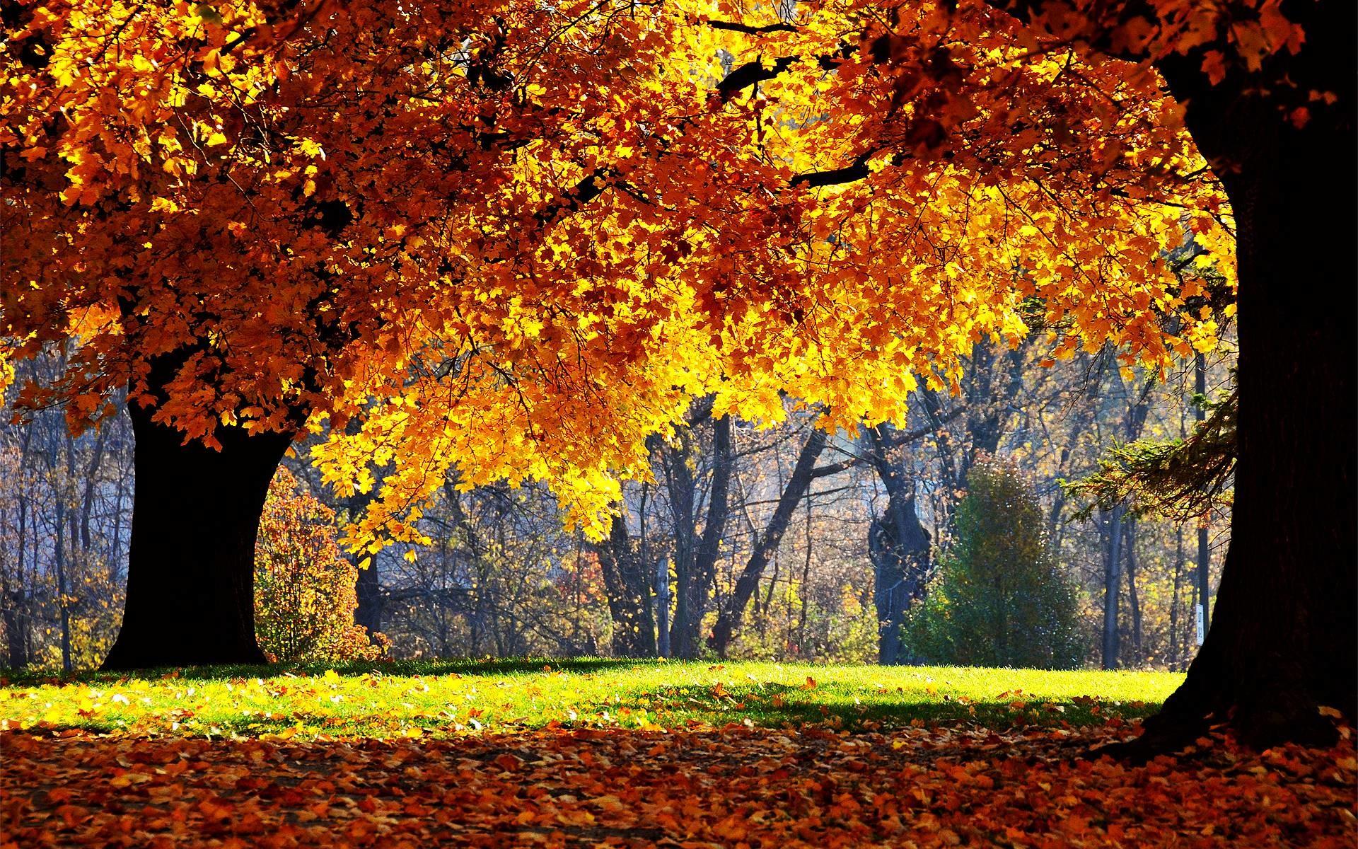 fall desktop wallpaper backgrounds – www.