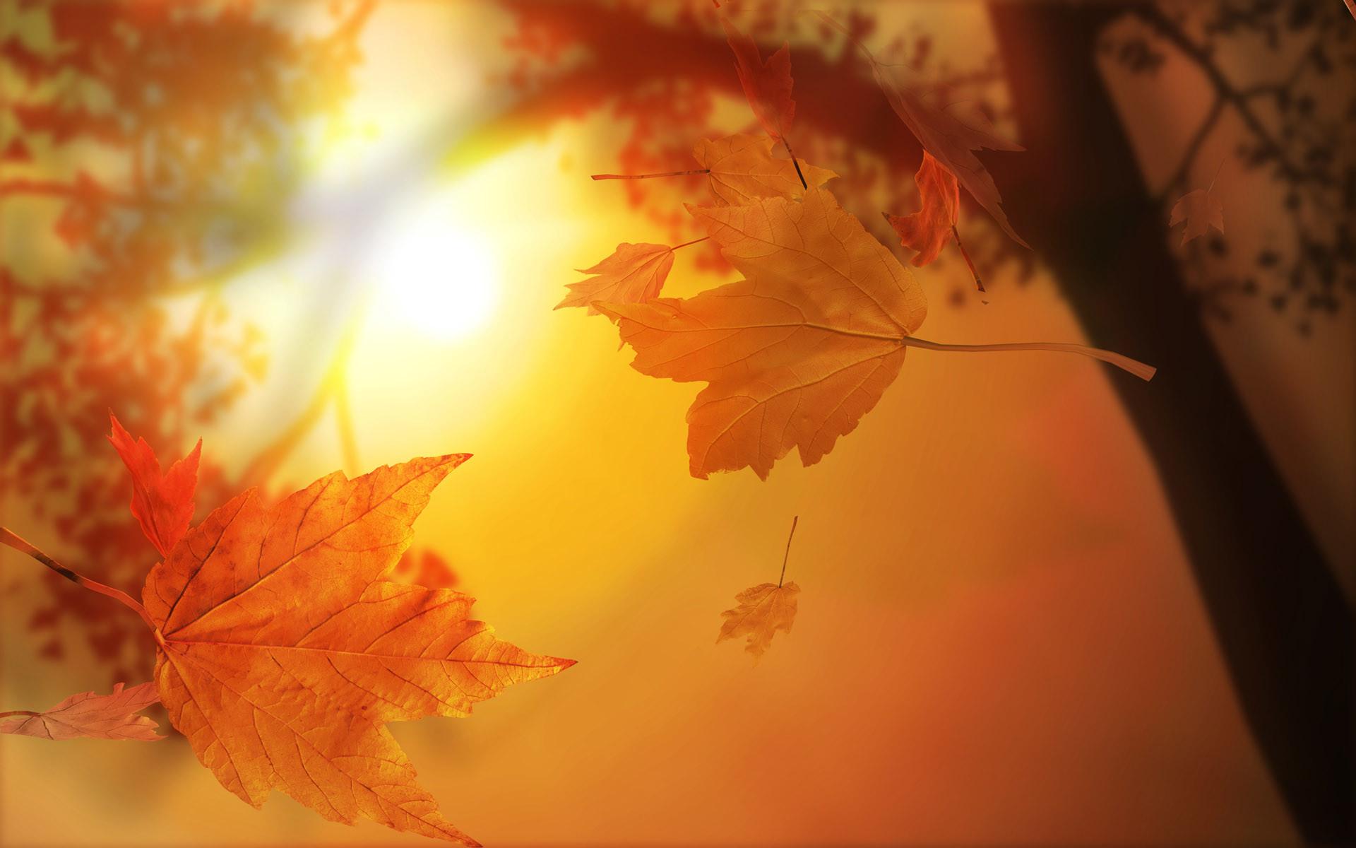 earth autumn Wallpaper Backgrounds