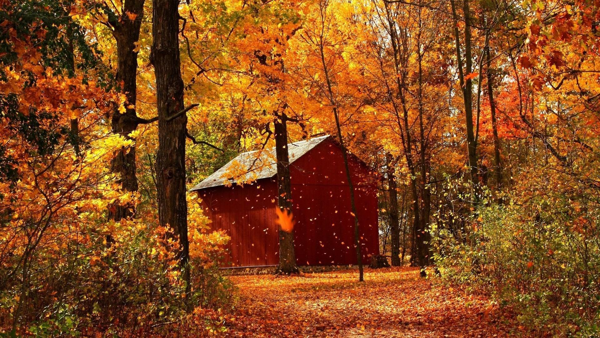 Autumn Breeze Background Image. Autumn Breeze Wallpaper