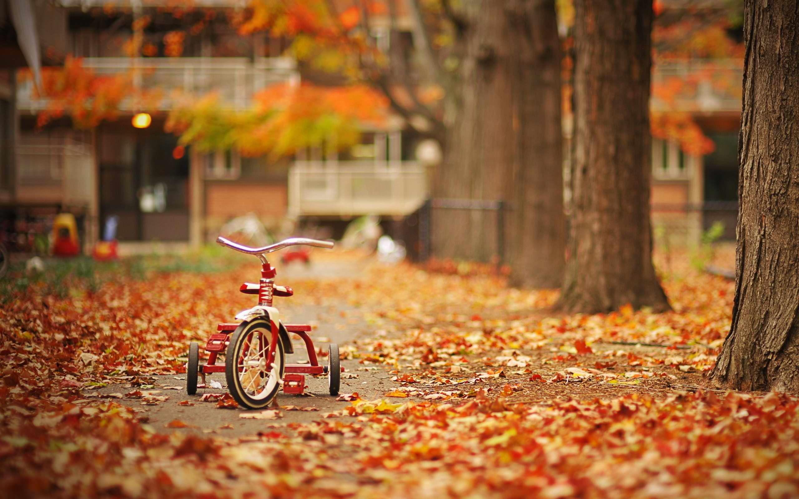 Fall Season, wallpaper, Fall Season hd wallpaper, background desktop