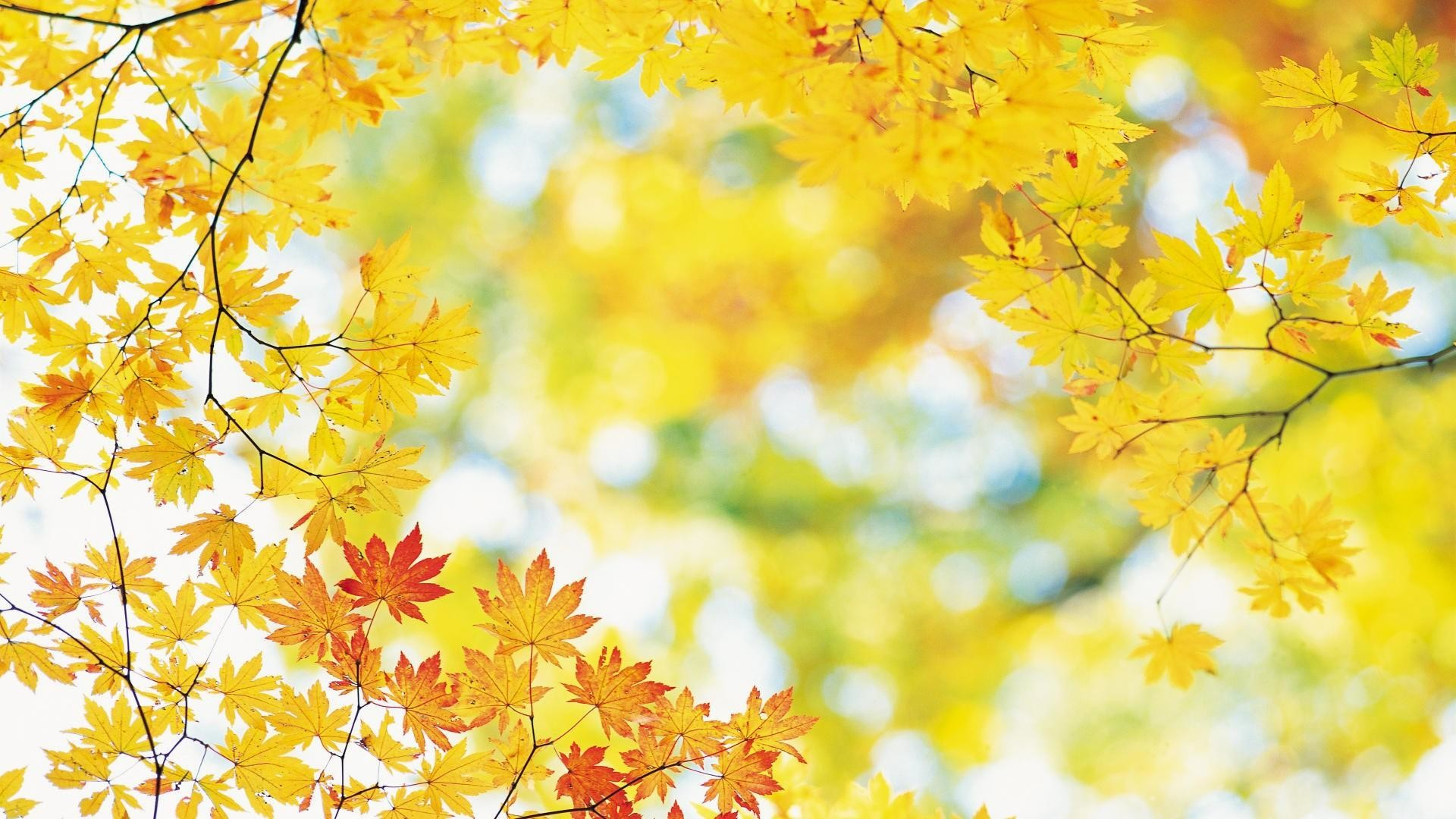 Fall-leaves-desktop-hd-wallpapers