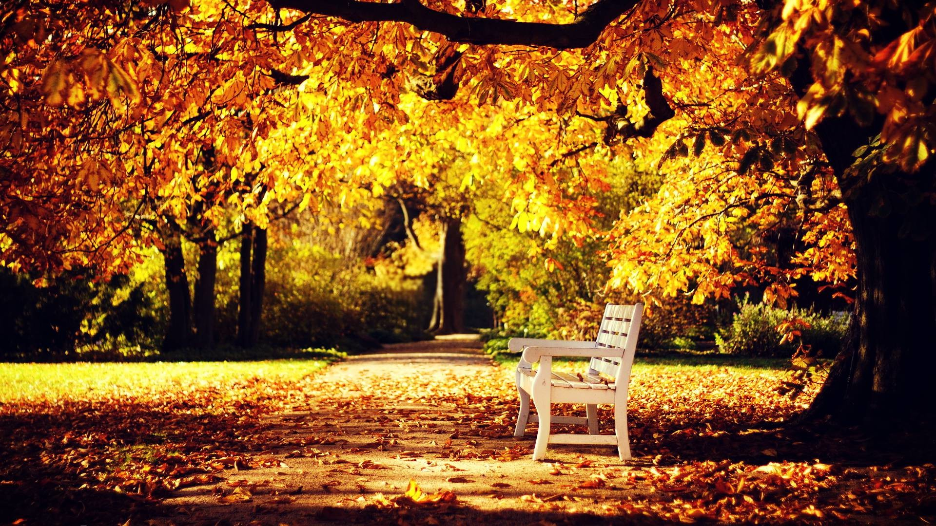"""Search Results for """"autumn wallpaper full hd"""" – Adorable Wallpapers"""