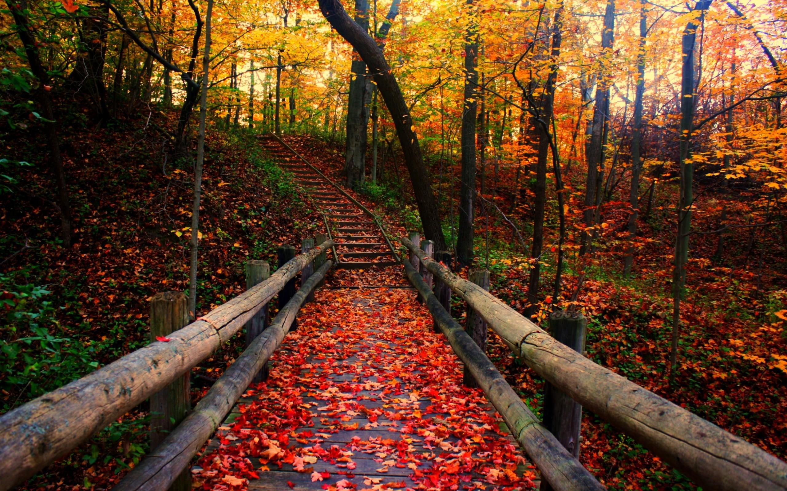 Free autumn wallpaper background